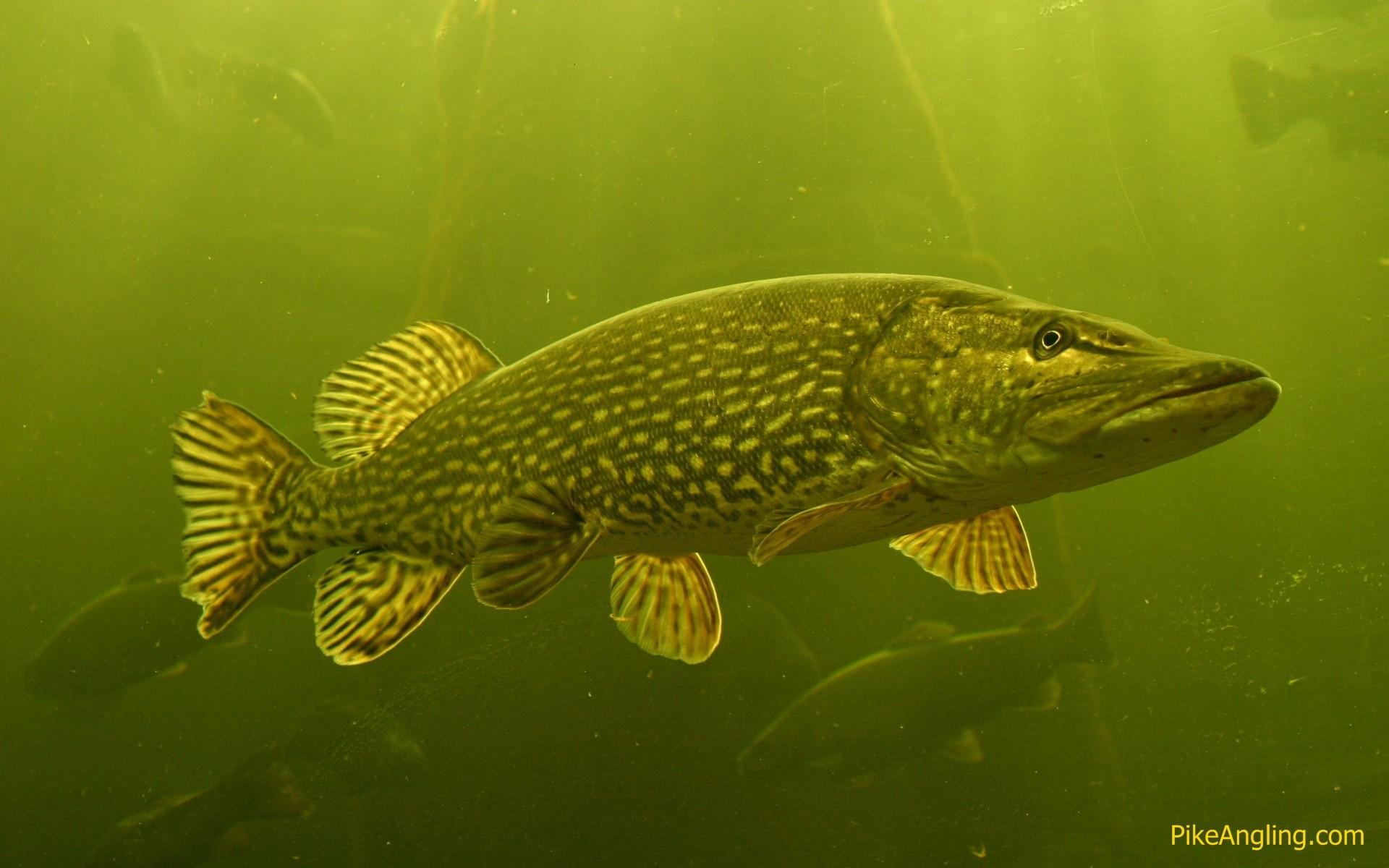 Get free high quality HD wallpapers bass fishing wallpaper hd