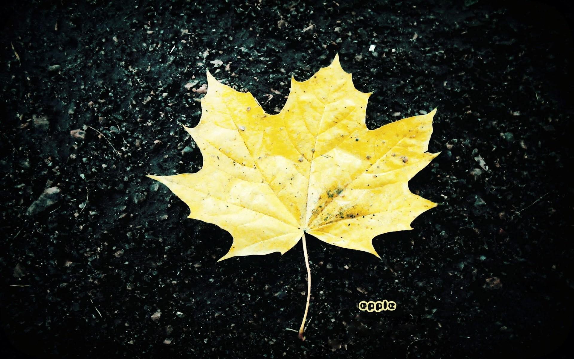 Maple Leaf 666312