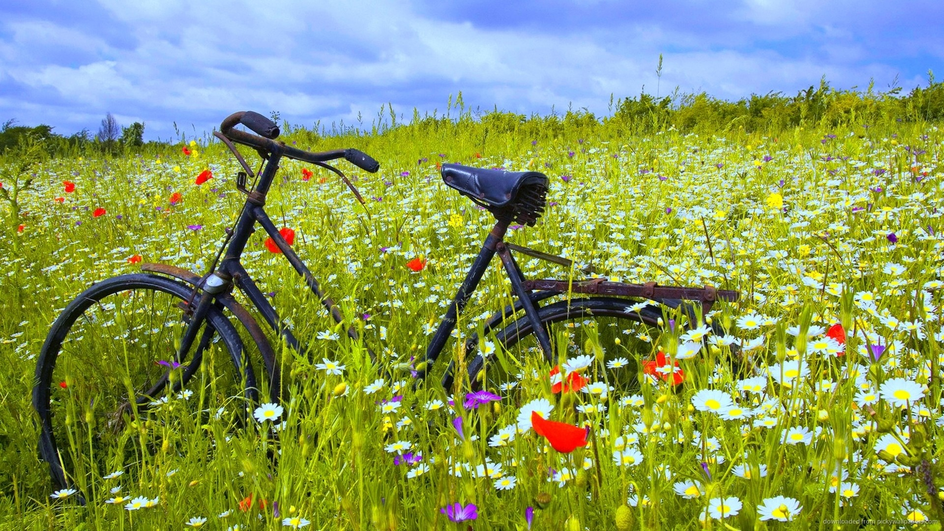 Bicycle In Flower Field Wallpaper picture