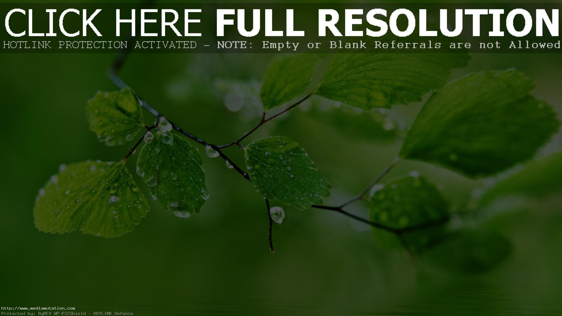 Nature HD Wallpapers for Desktop 4K 3D Nature Beautiful Wallpapers free  download for Laptop PC