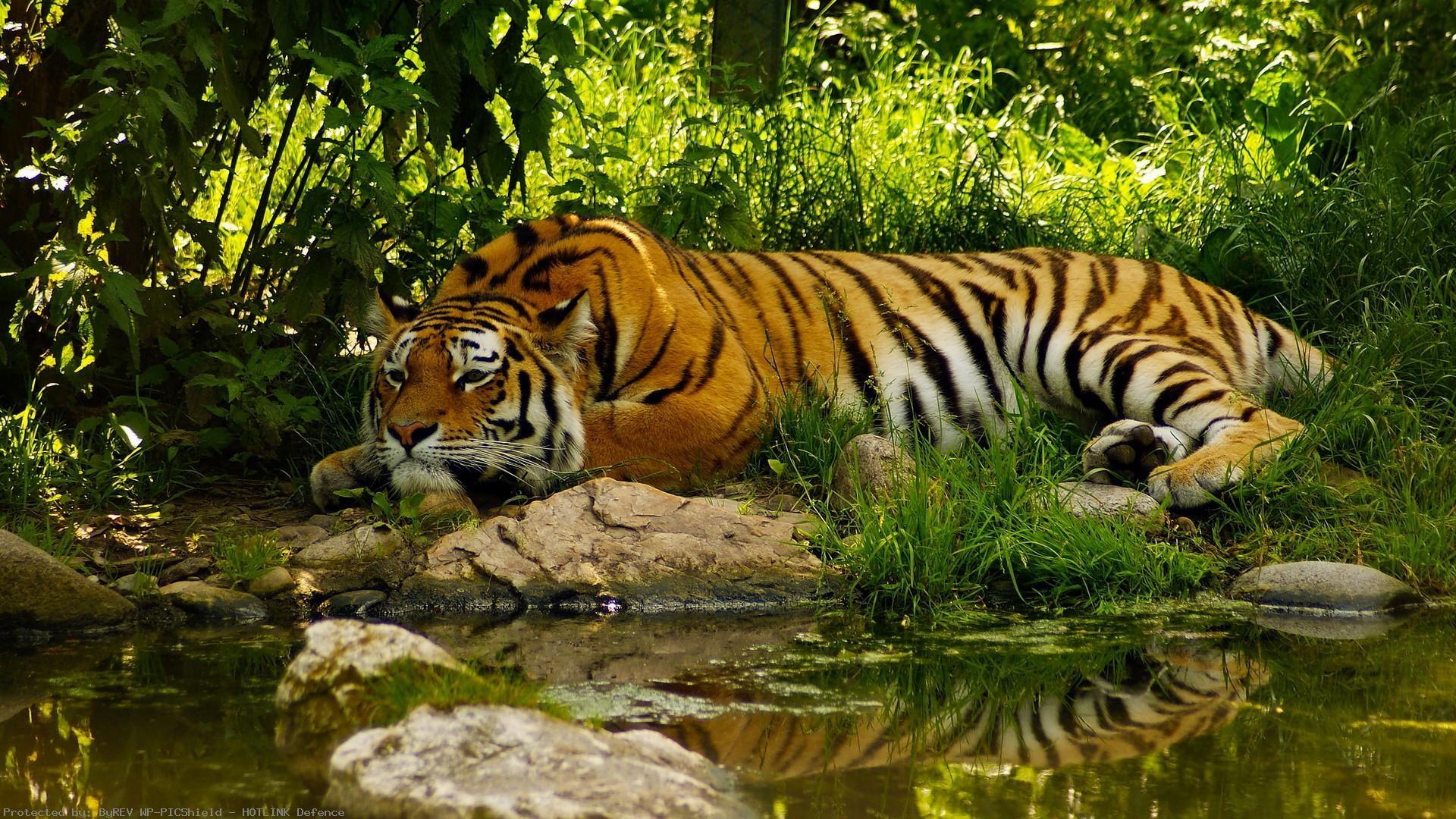 Jungle-Waterfall-HD-desktop-Fullscreen-Mobile-Dual-wallpaper-