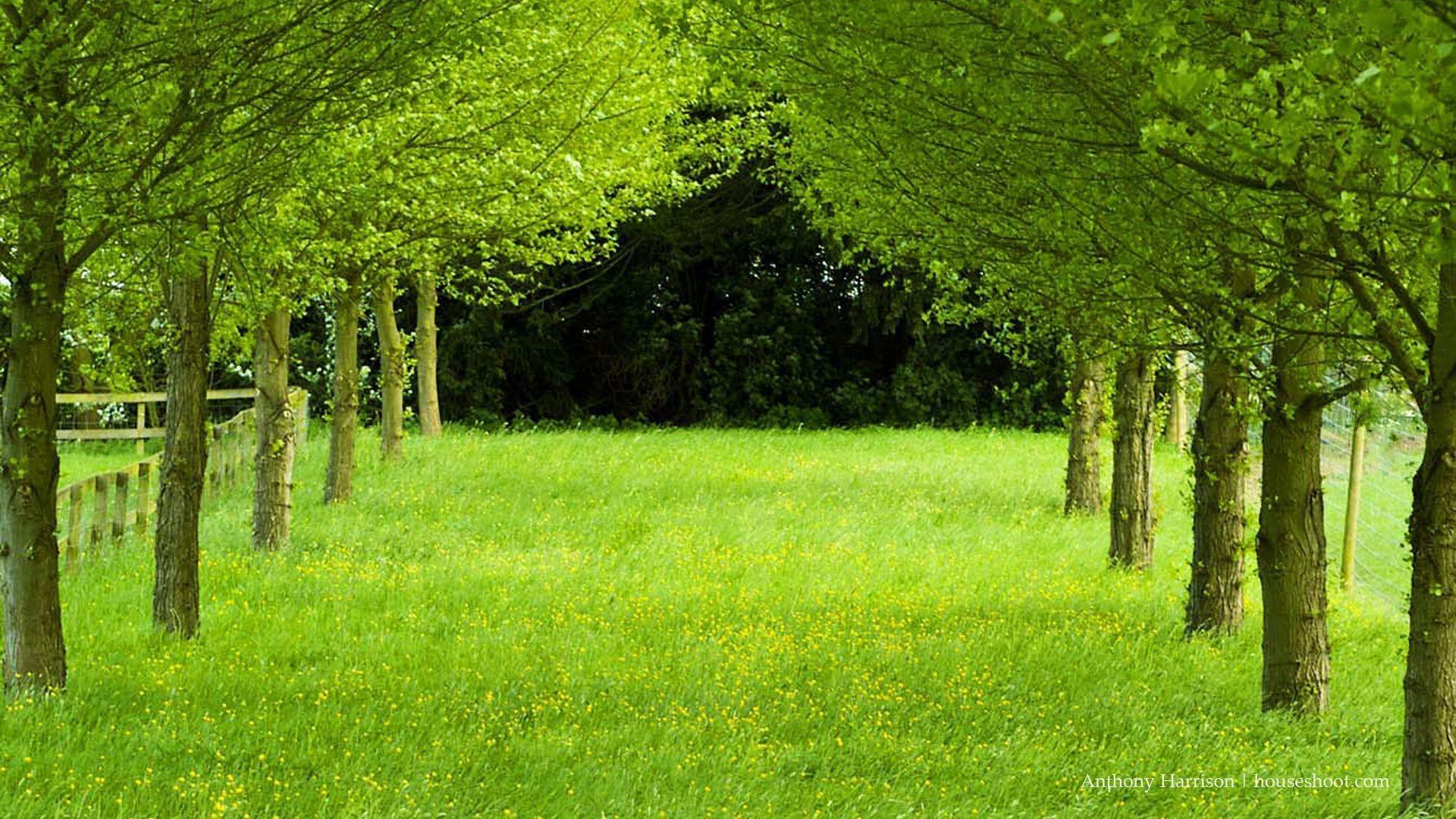 Free Desktop Wallpaper Description Free Download Green Road