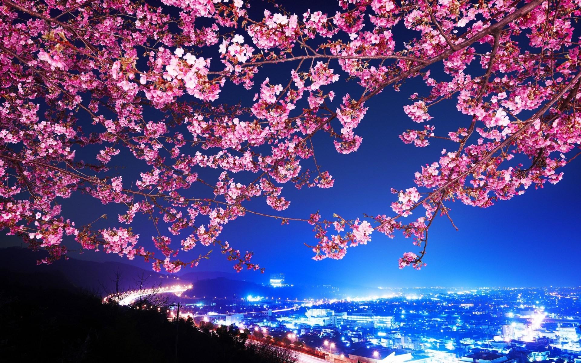 Drawn Cherry Blossom Desktop Wallpaper