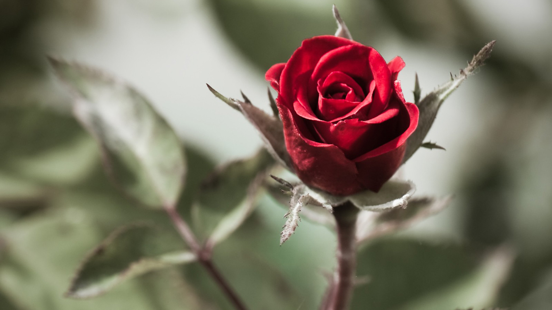 … beautiful flower screensaver   Wallpaper