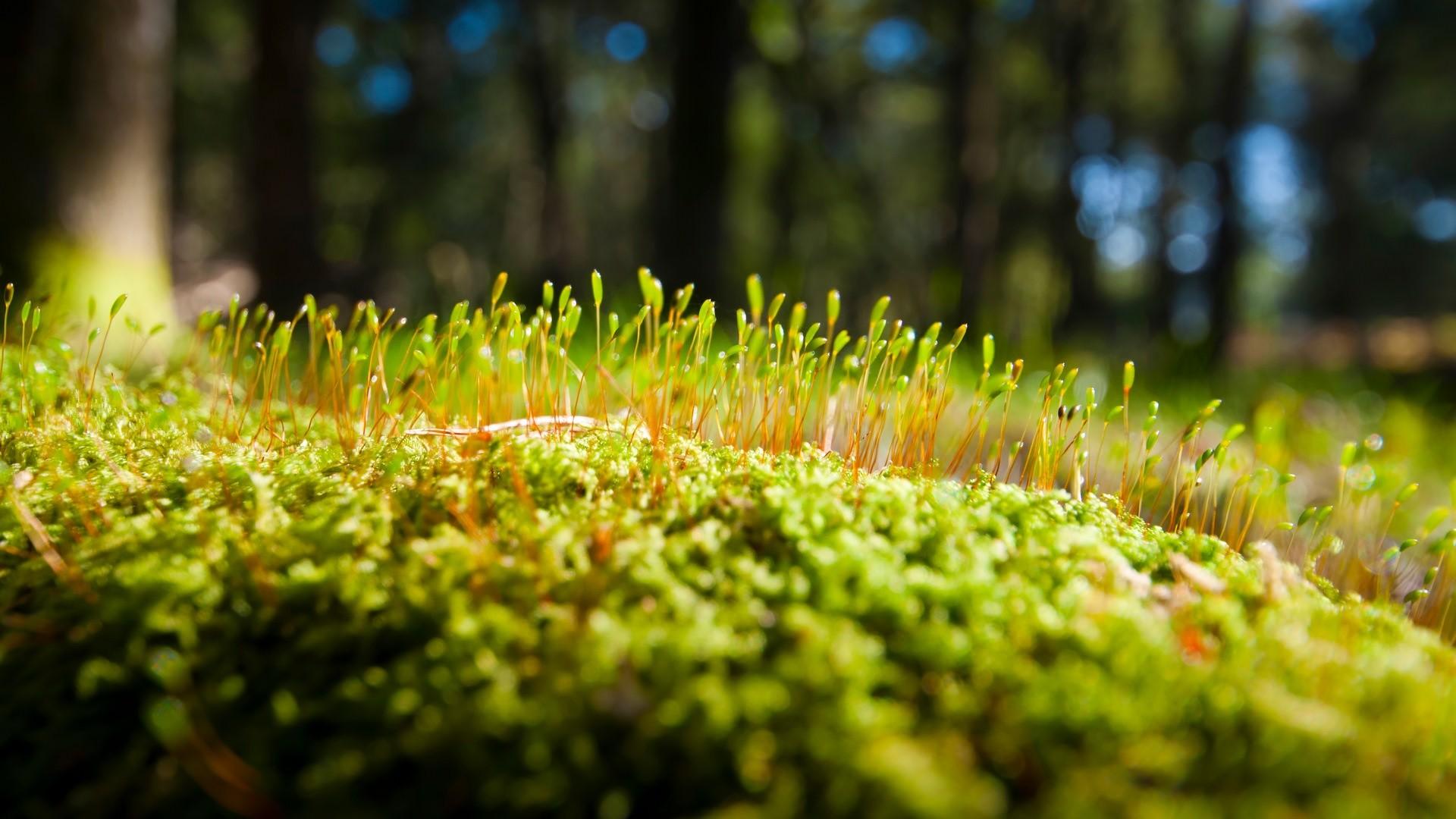 cool hd wallpapers close up macro moss