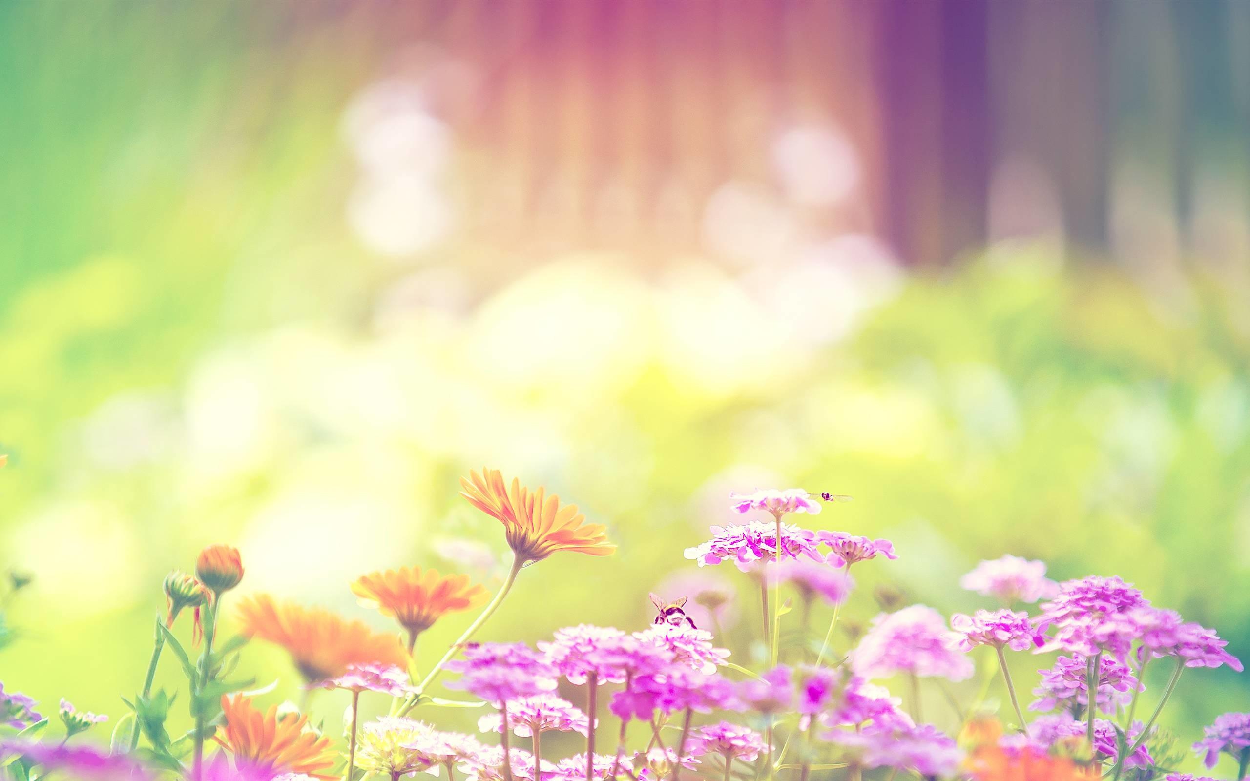 Trendy Desktop Spring Flowers Hd Wallpaper 2560x1600PX ~ Colorful .