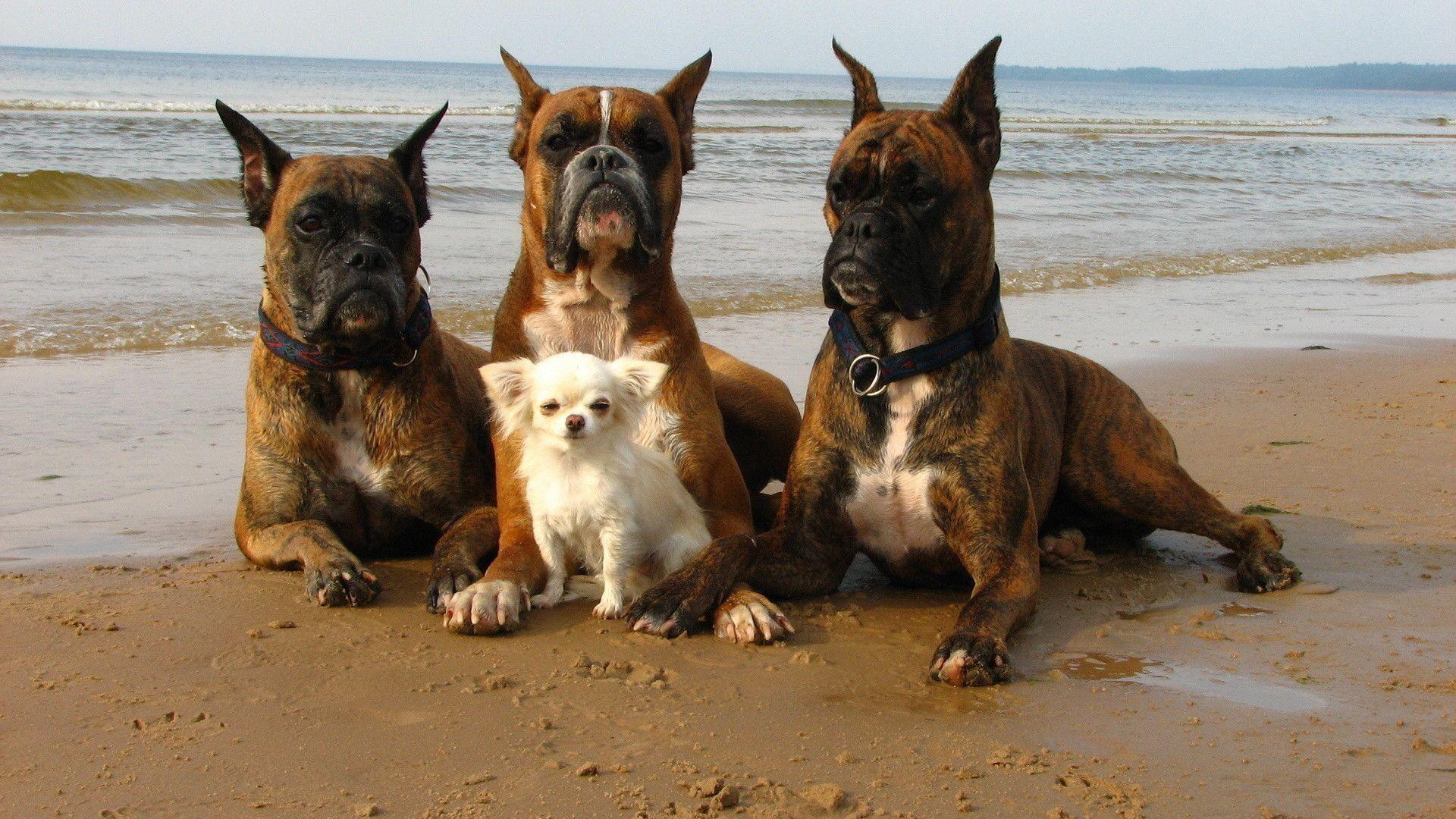 desktop wallpaper pictures of dogs – www.