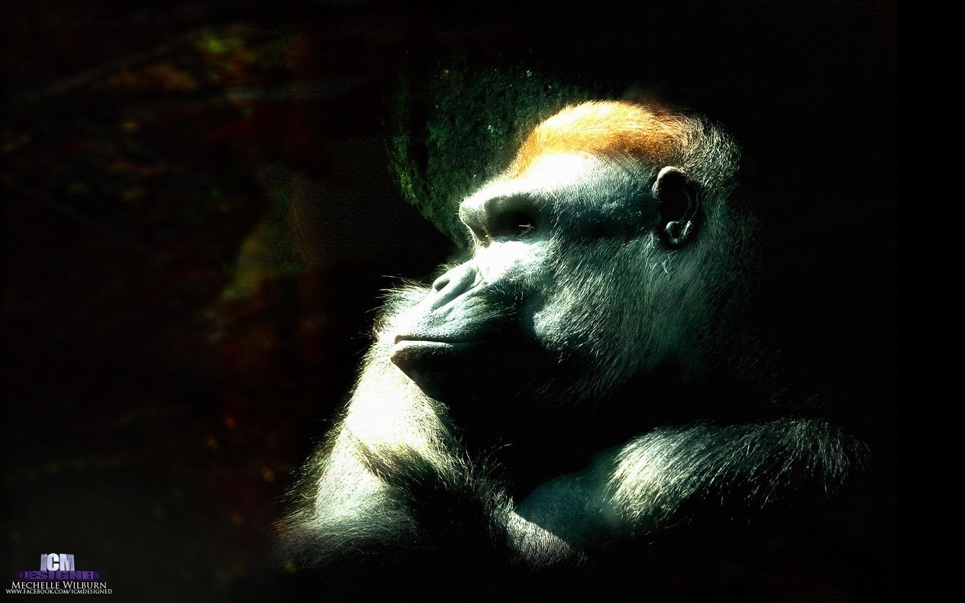 Ape Wallpaper