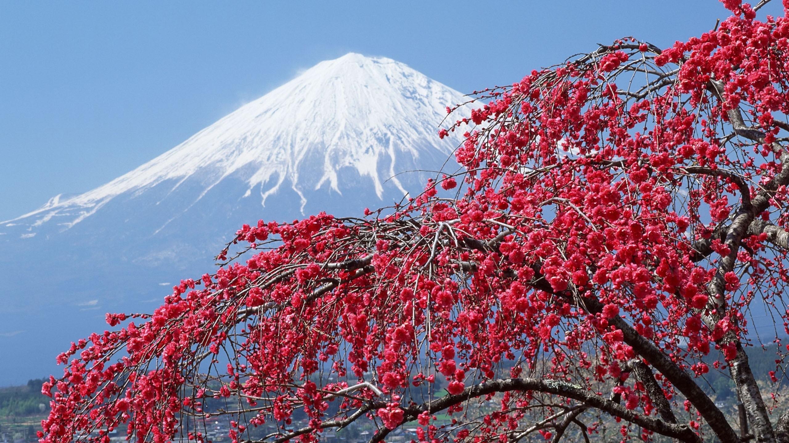 Jorden/Natur – Mount Fuji Vulkan Japan Blossom Bakgrund