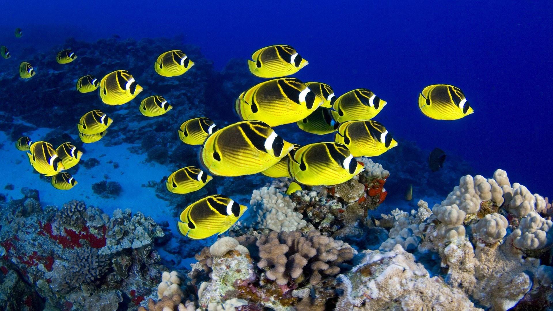 hd pics photos fish yellow marine sea desktop background wallpaper