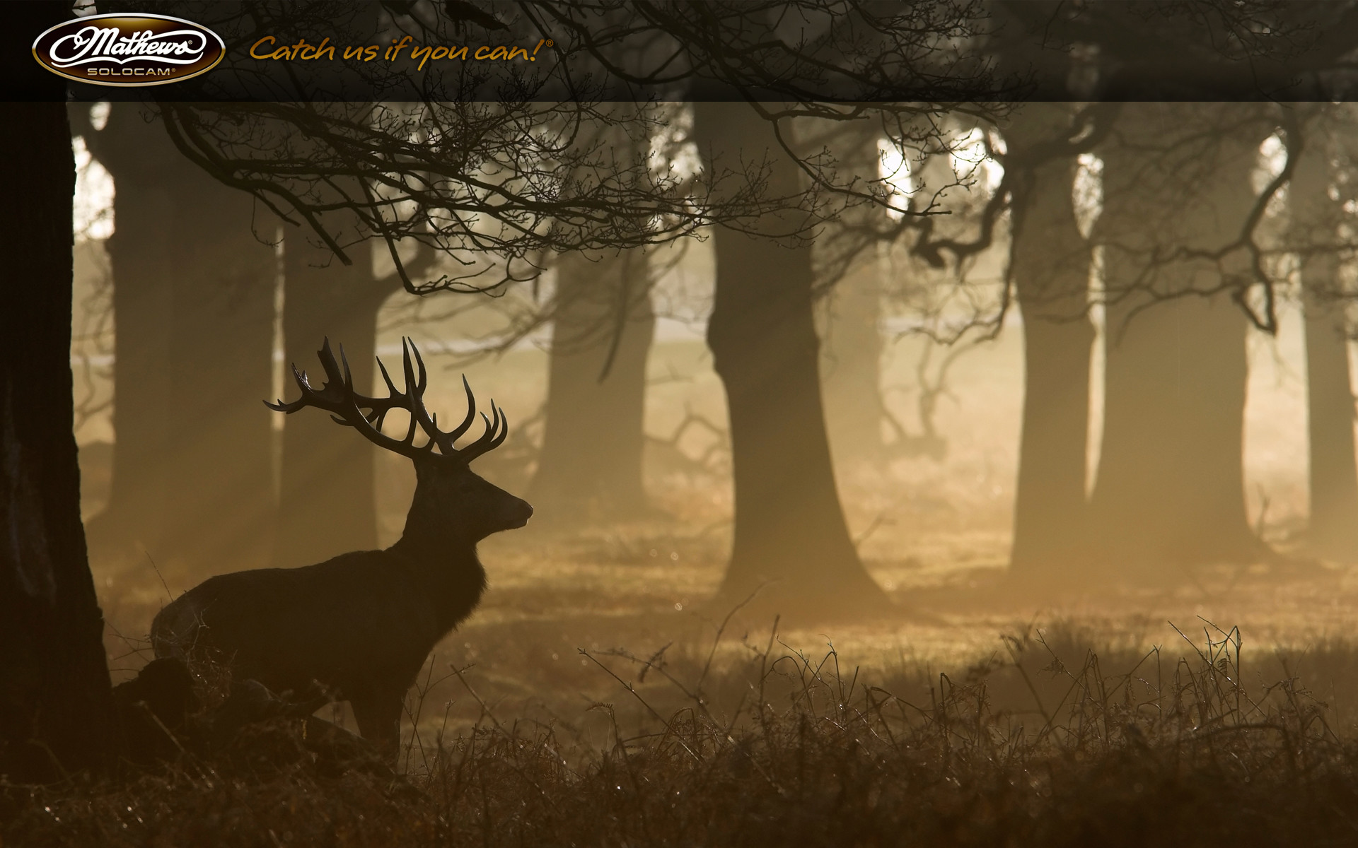 Go Back > Pix For > Mathews Archery Wallpaper