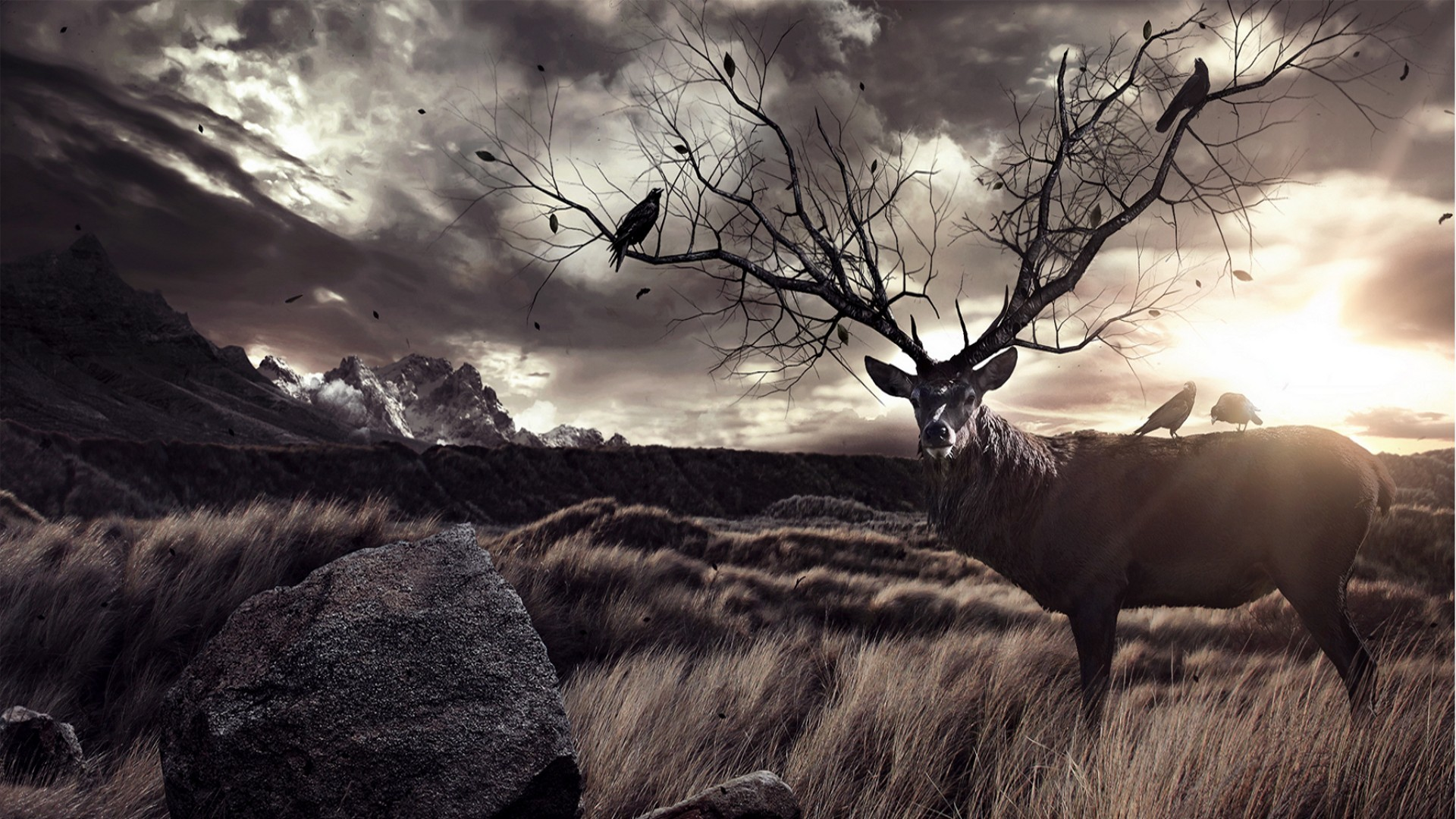 <b>Deer Wallpapers</b> | Best <b>Wallpapers<