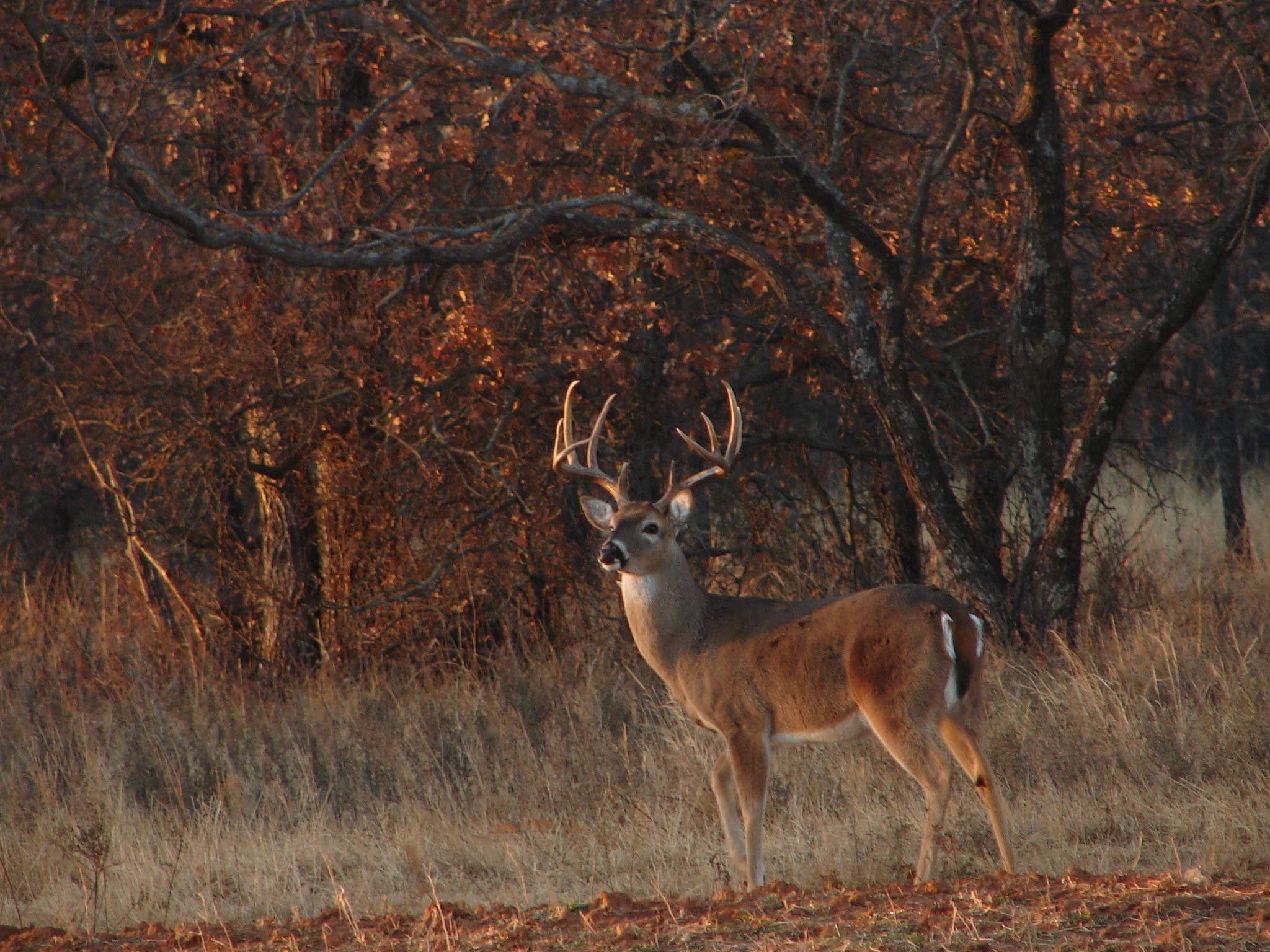 Download Whitetail Deer Hunting Forums Thread Cool Pics Age And ..