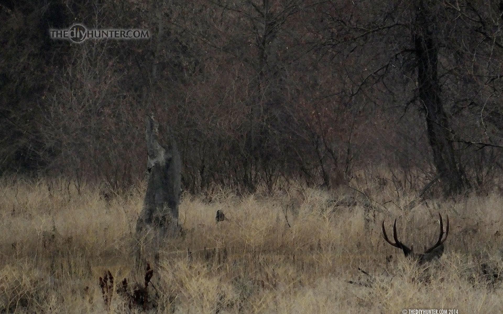 The DIY Hunter – Hunting Wallpapers