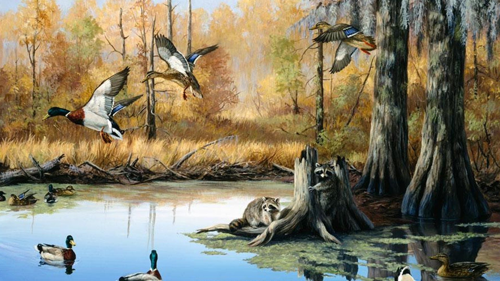 … duck hunting wallpaper iphone awswallpapershd com; bow …