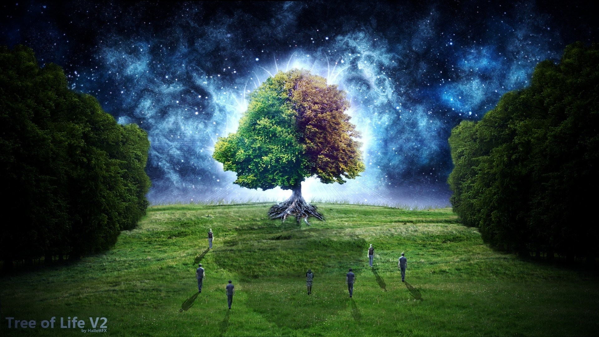 … tree of life wallpapers gallery image mrfab …