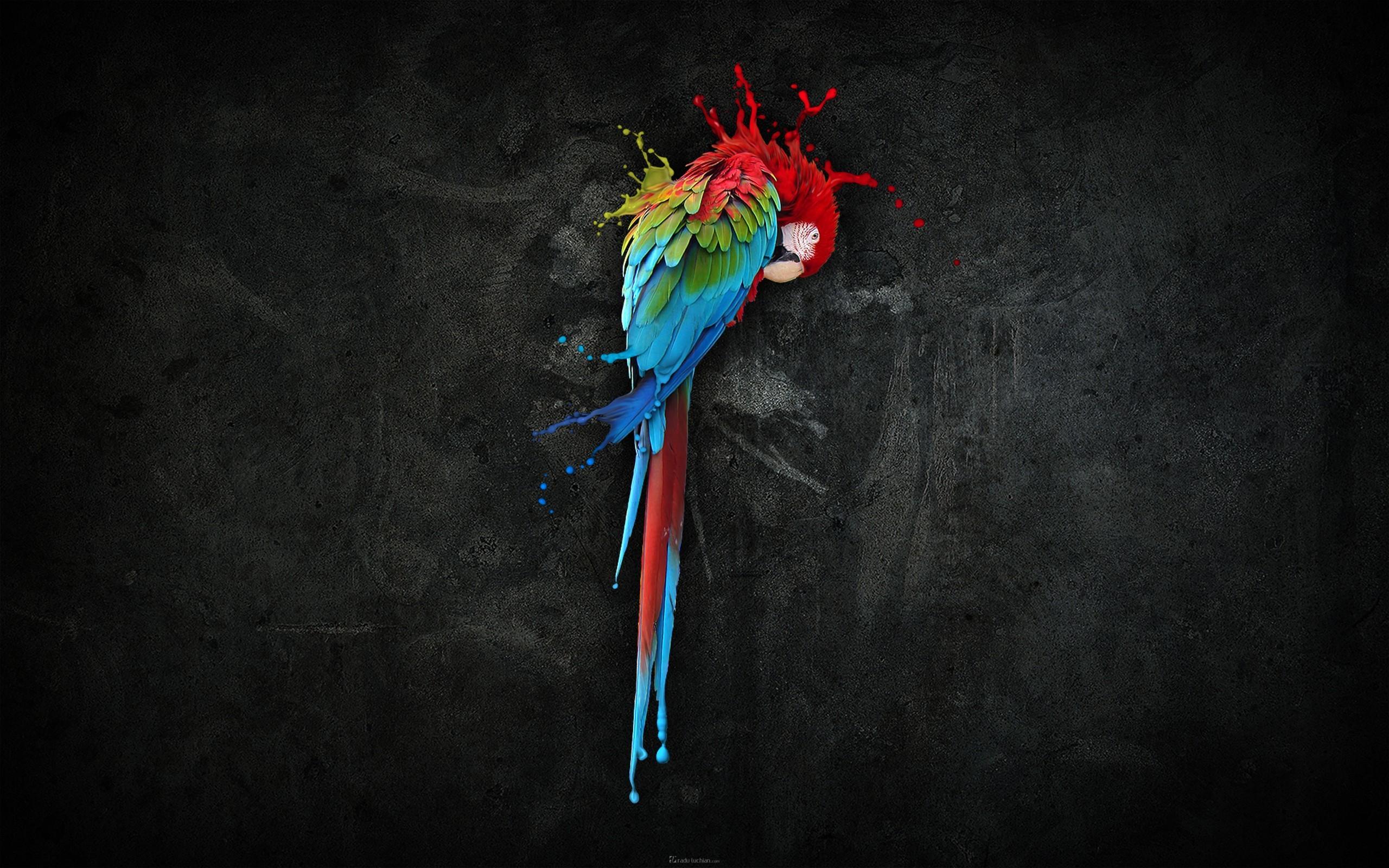 parrot hd 1080p desktop wallpaper 0007