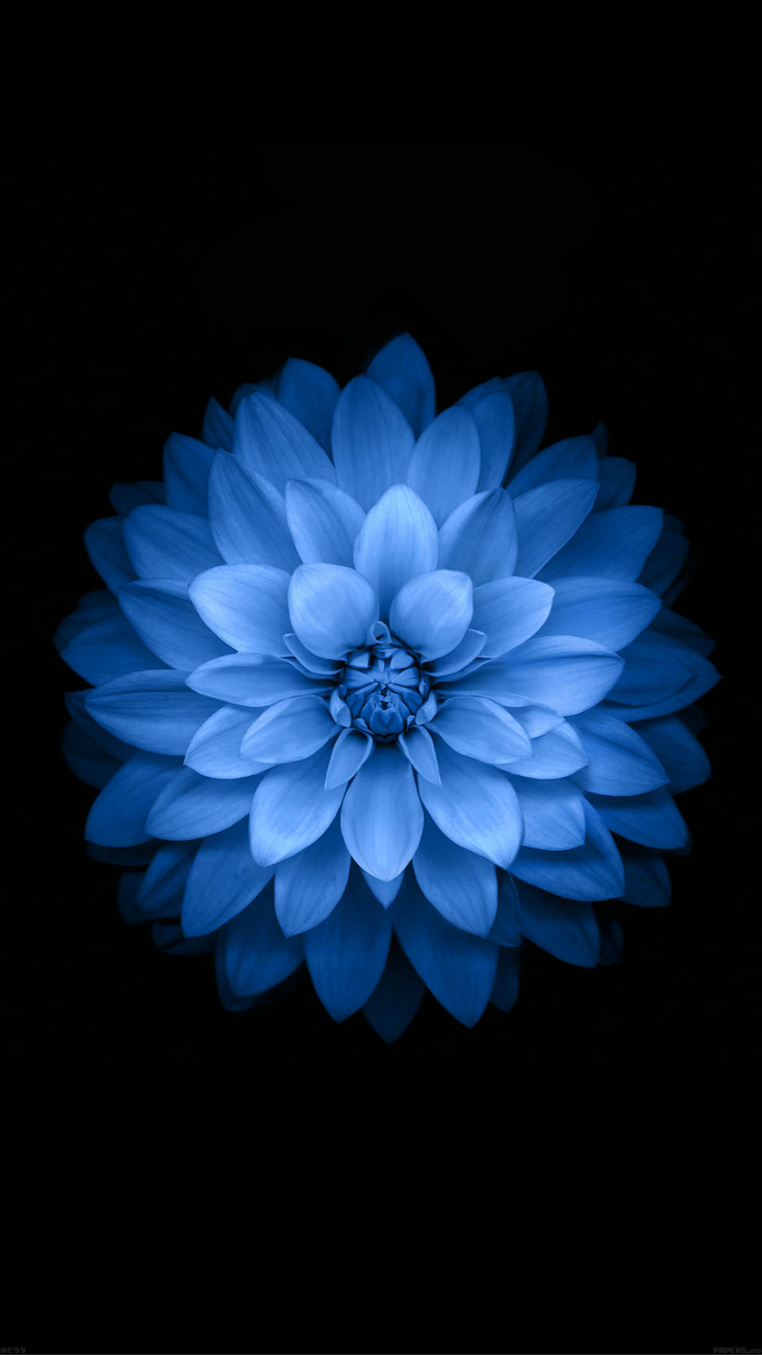 Variant Blue Lotues iOS 8 Background Art #iPhone #6 #wallpaper