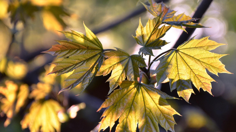 Wallpapers Backgrounds – Autumn desktop wallpaper resolution 3200×1800  picture