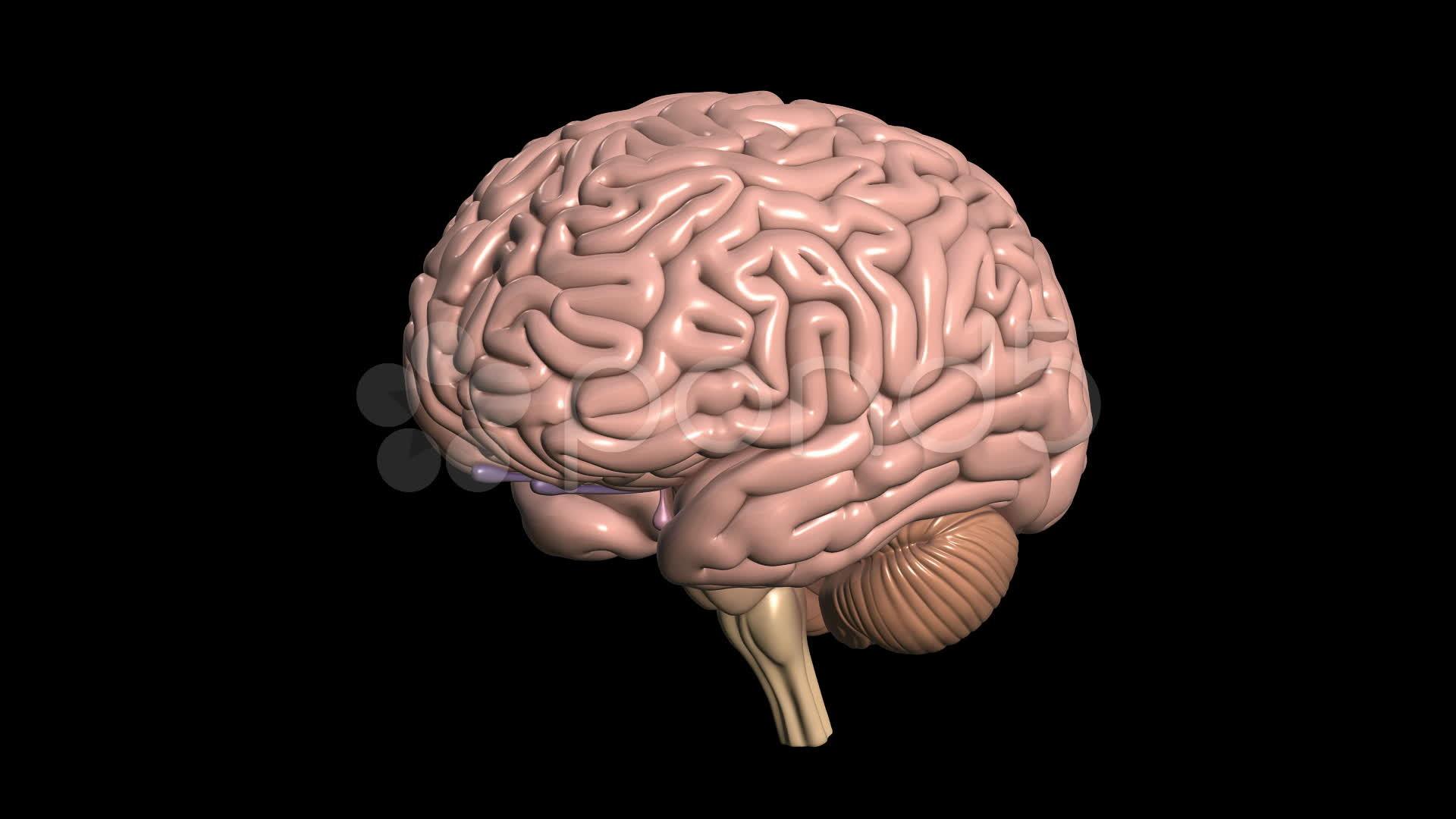 3D Brain Wallpaper Coll