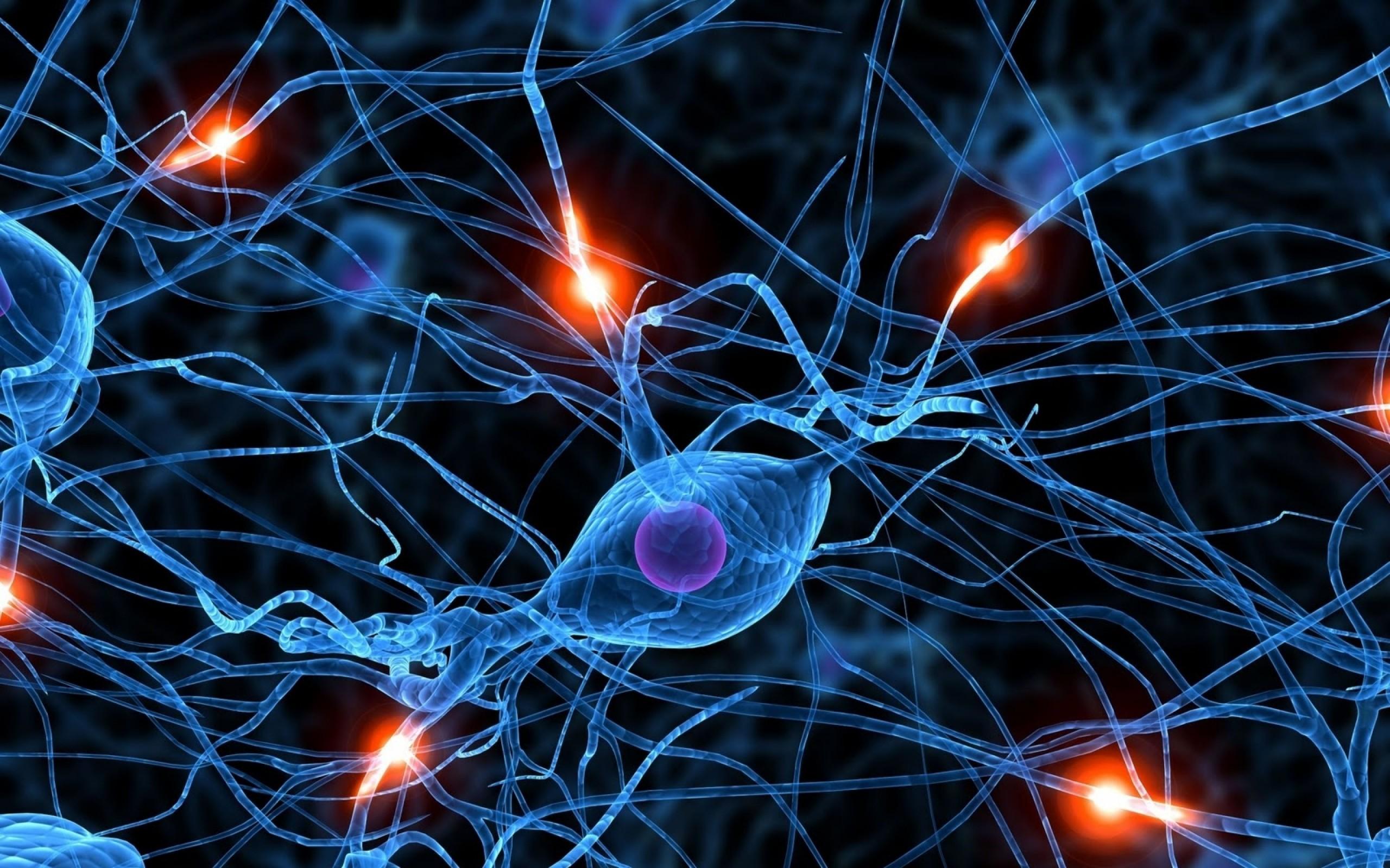brain synapse neurons 1600×1200 wallpaper Art HD Wallpaper