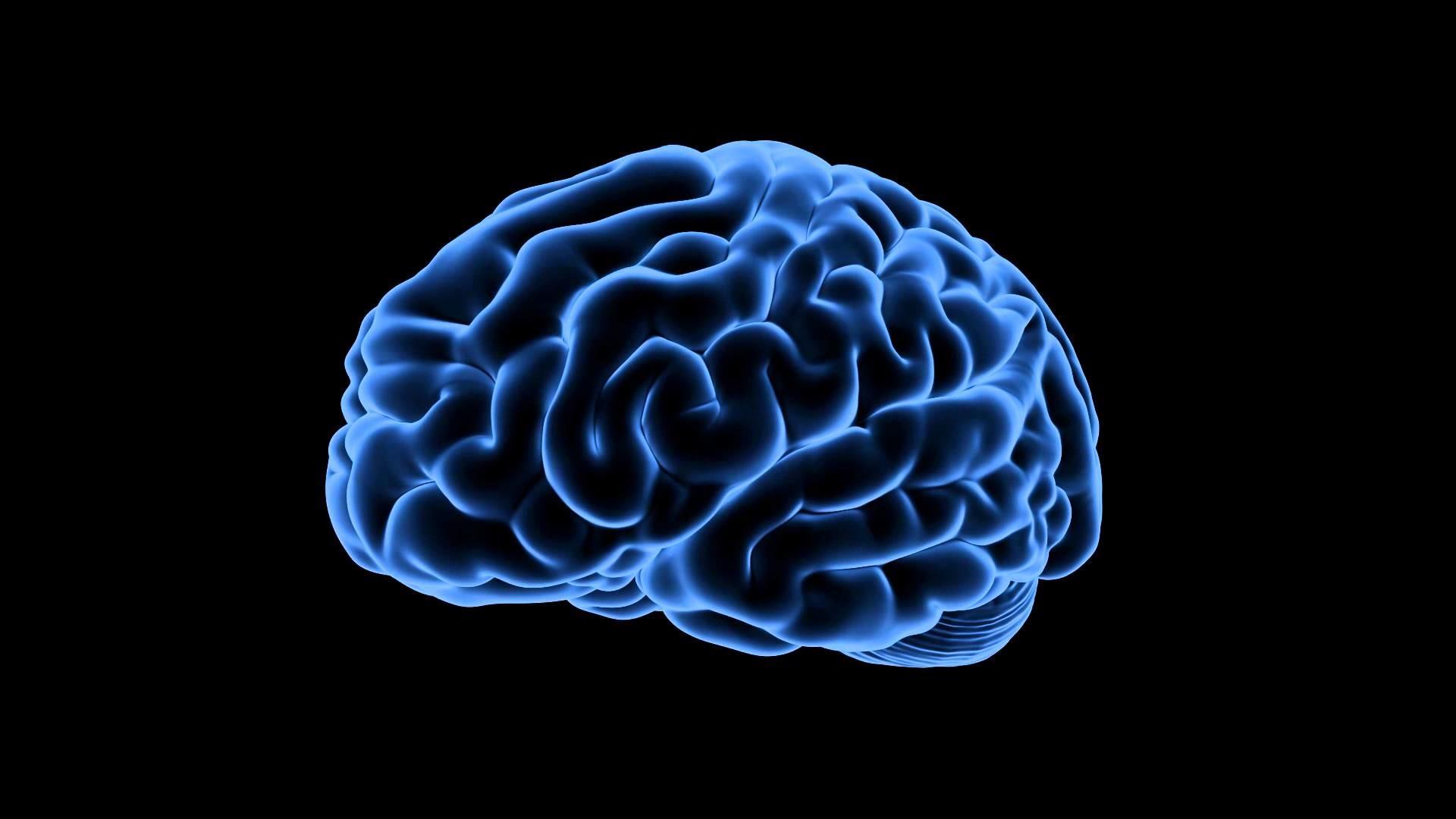 Royalty Free Medical Human Brain HD Footage – Brain ( Blue)360 Degree View  – YouTube