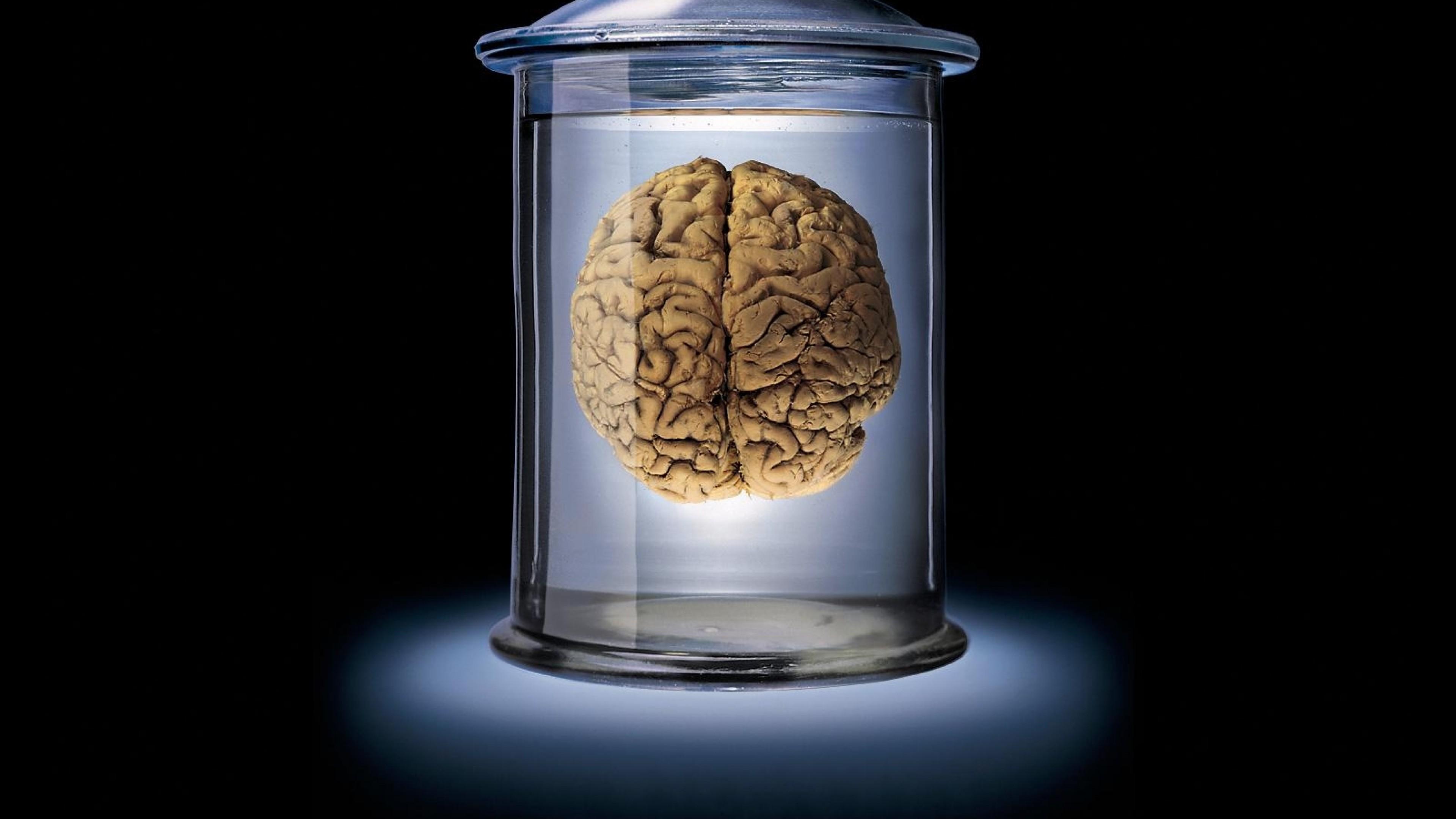 Wallpaper brain, glass, brown, blue, black, bank