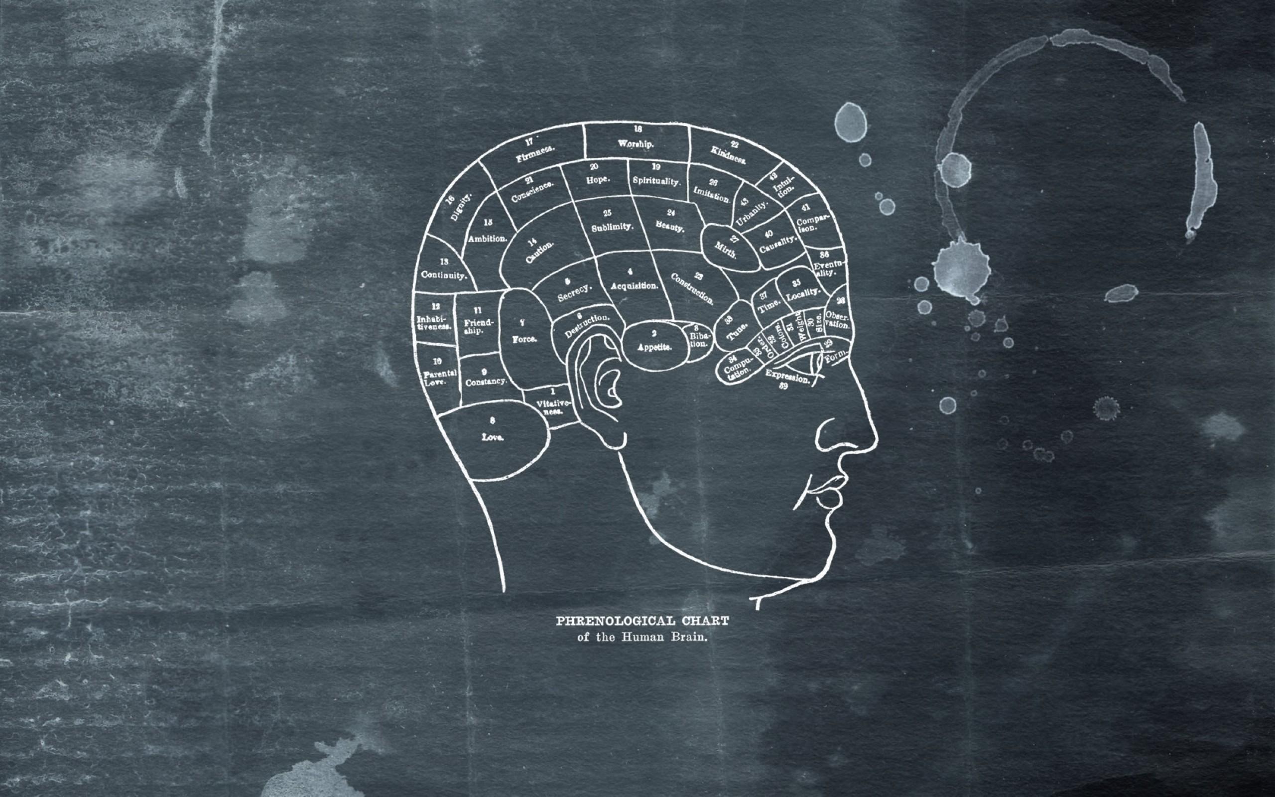 brain 1680×1050 wallpaper Art HD Wallpaper