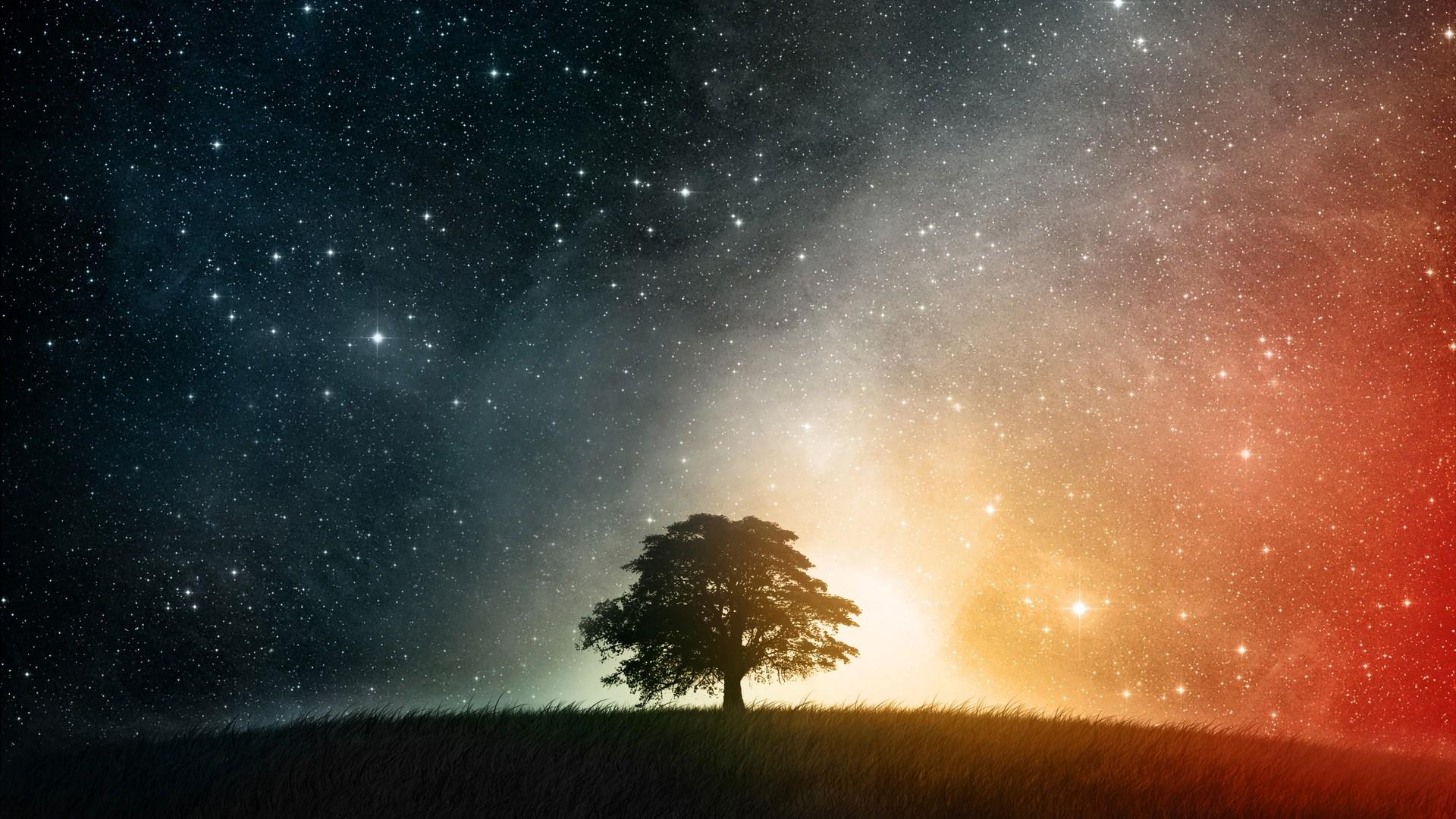 tree against night sky