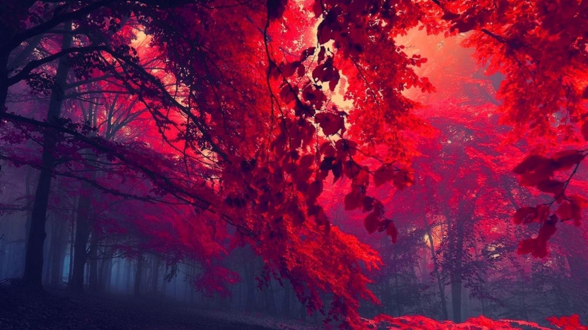 Autumn Nature Tree Landscape Forest Wallpaper Portrait Detail