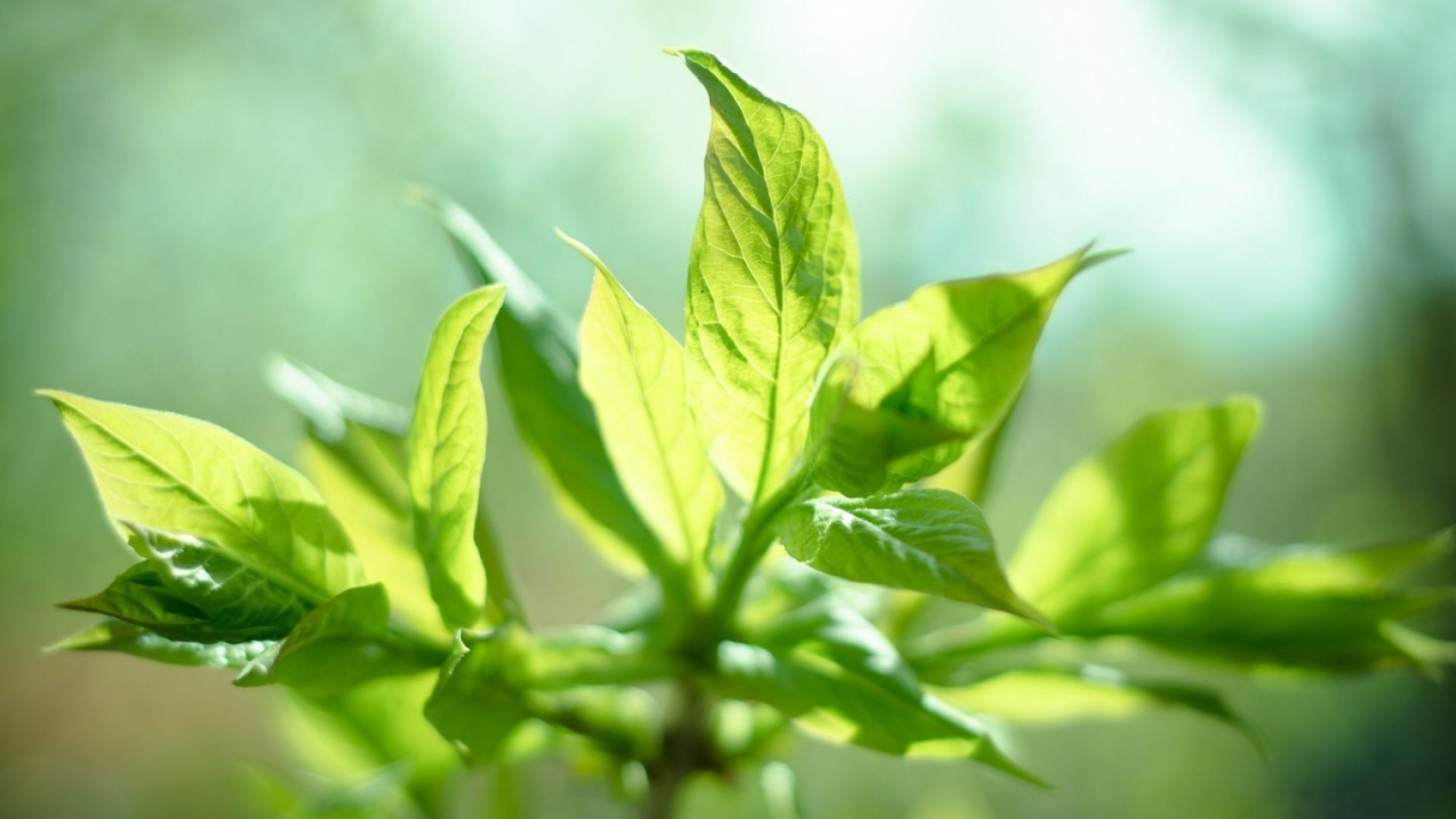 Preview wallpaper sun, leaves, mint, plant 1920×1080