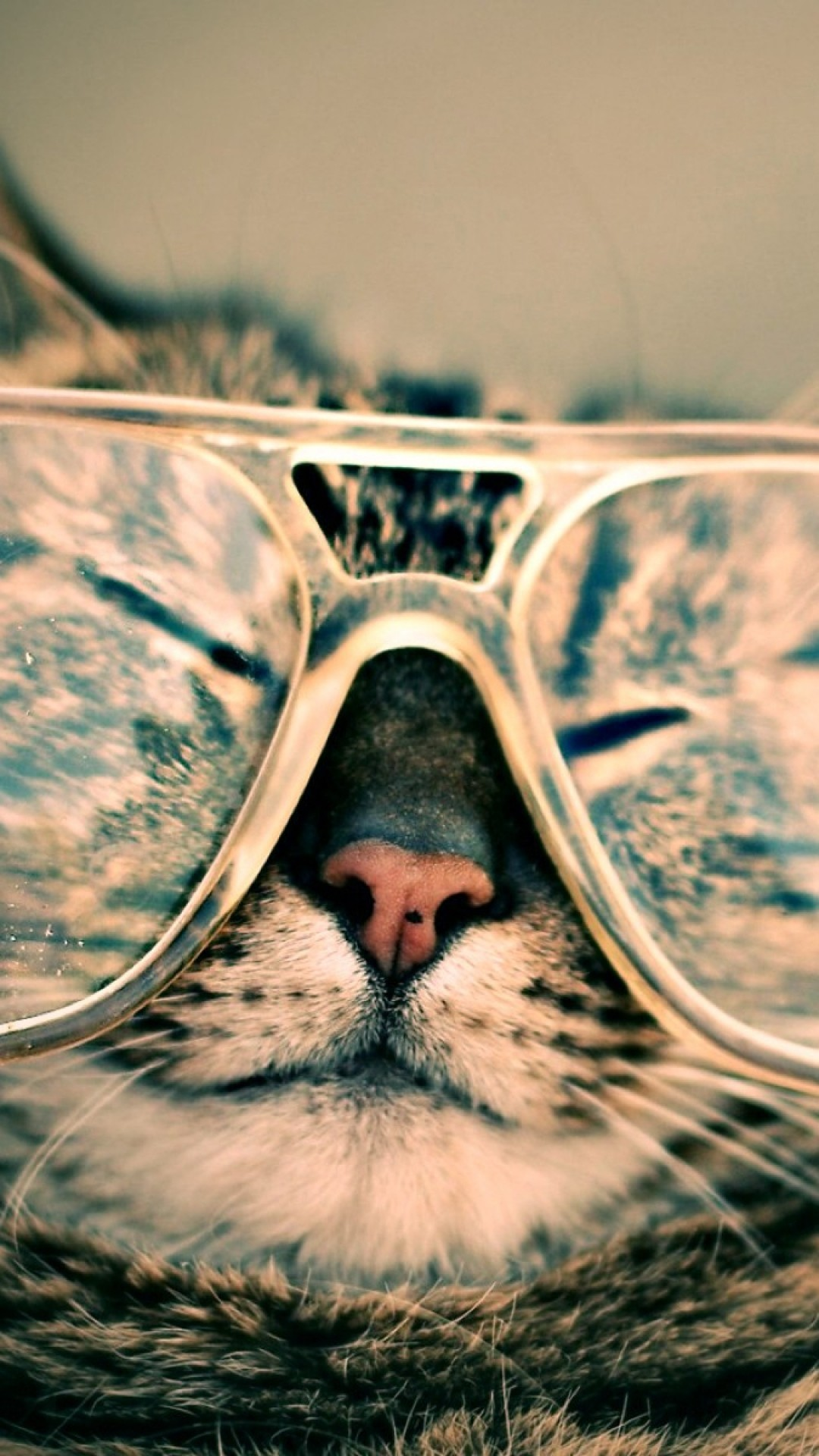 ↑↑TAP AND GET THE FREE APP! Fun Funny Cat in Glasses Beige Cool