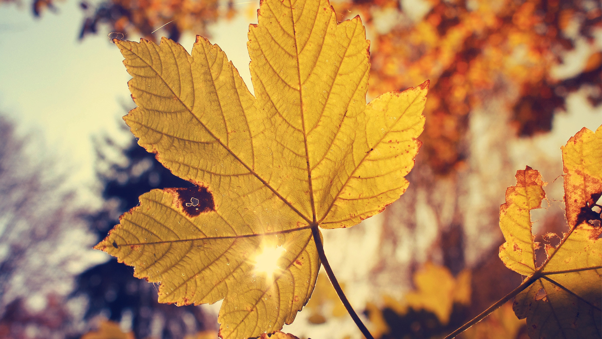Cute Fall Wallpaper Backgrounds – WallpaperSafari