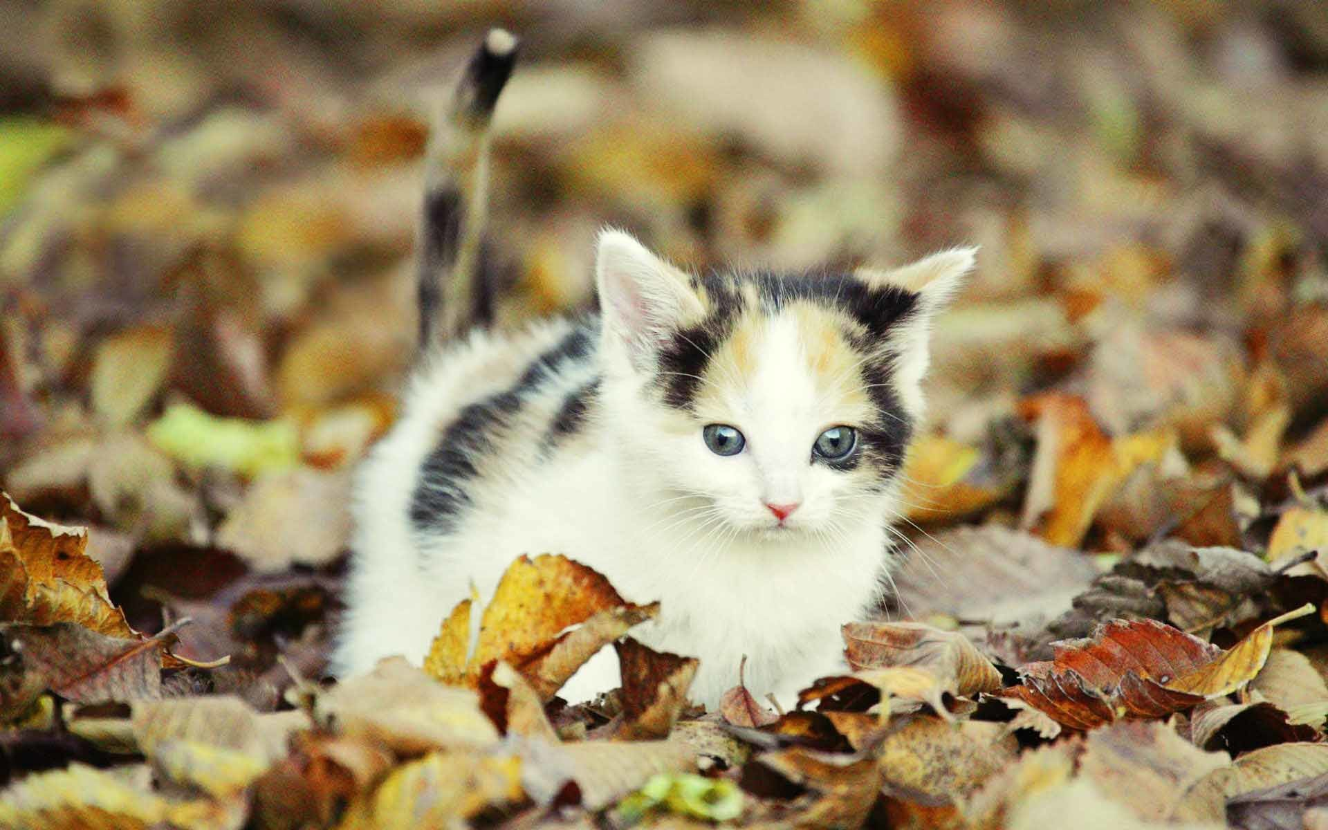 Wallpapers For > Cute Fall Desktop Backgrounds