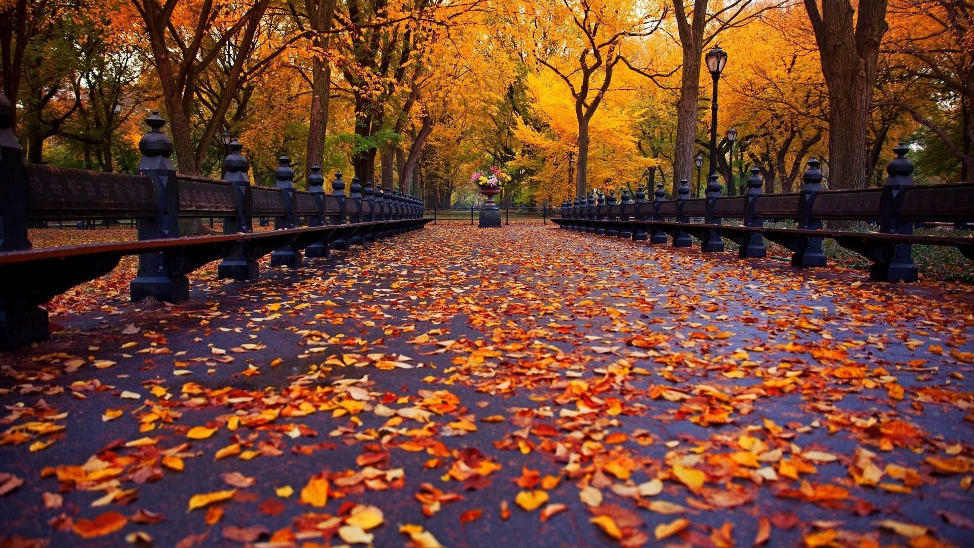 <b>cute autumn wallpaper</b> – TheFunnyPlace
