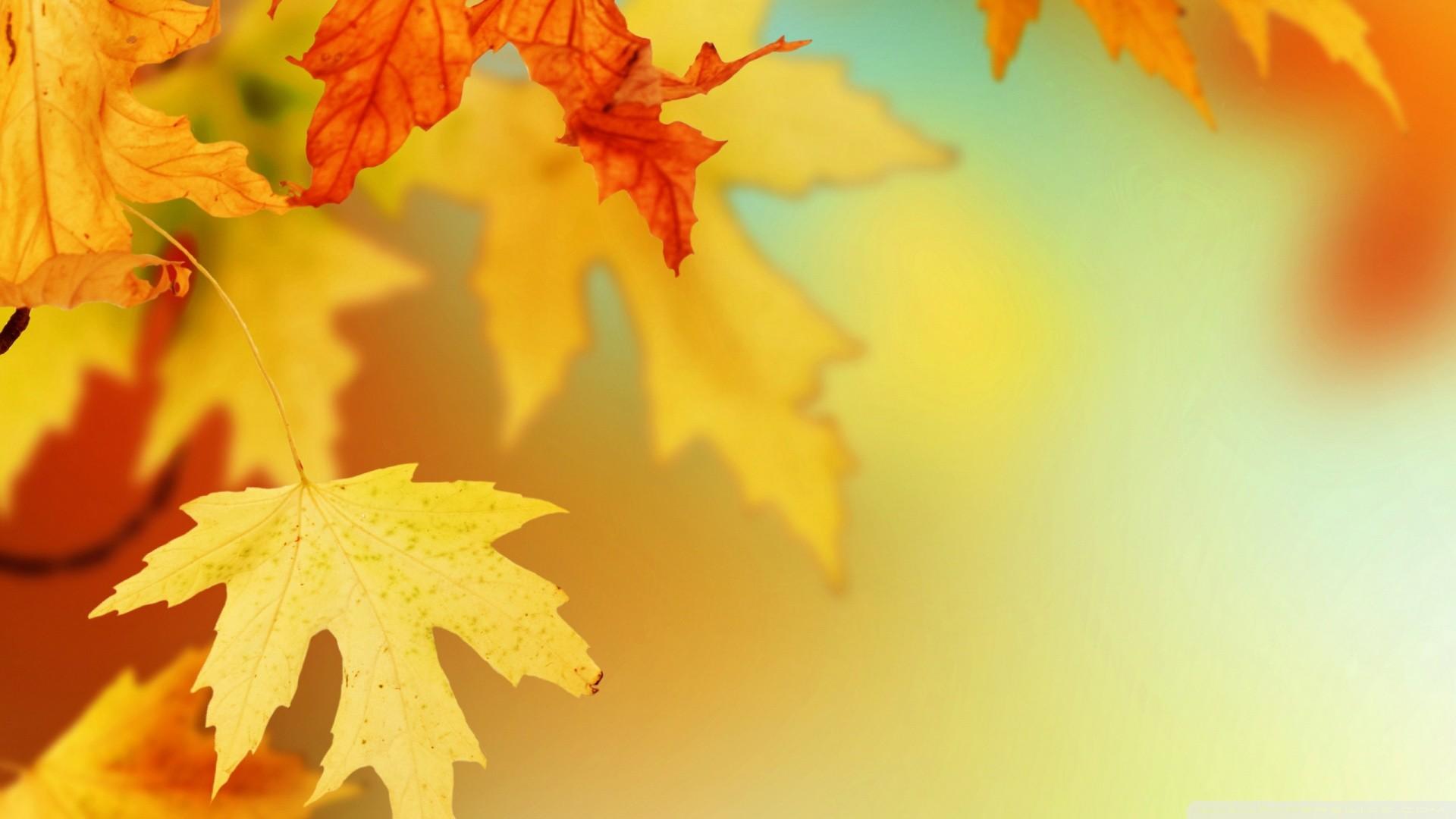 Download <b>autumn Wallpaper Background</b> | 25971