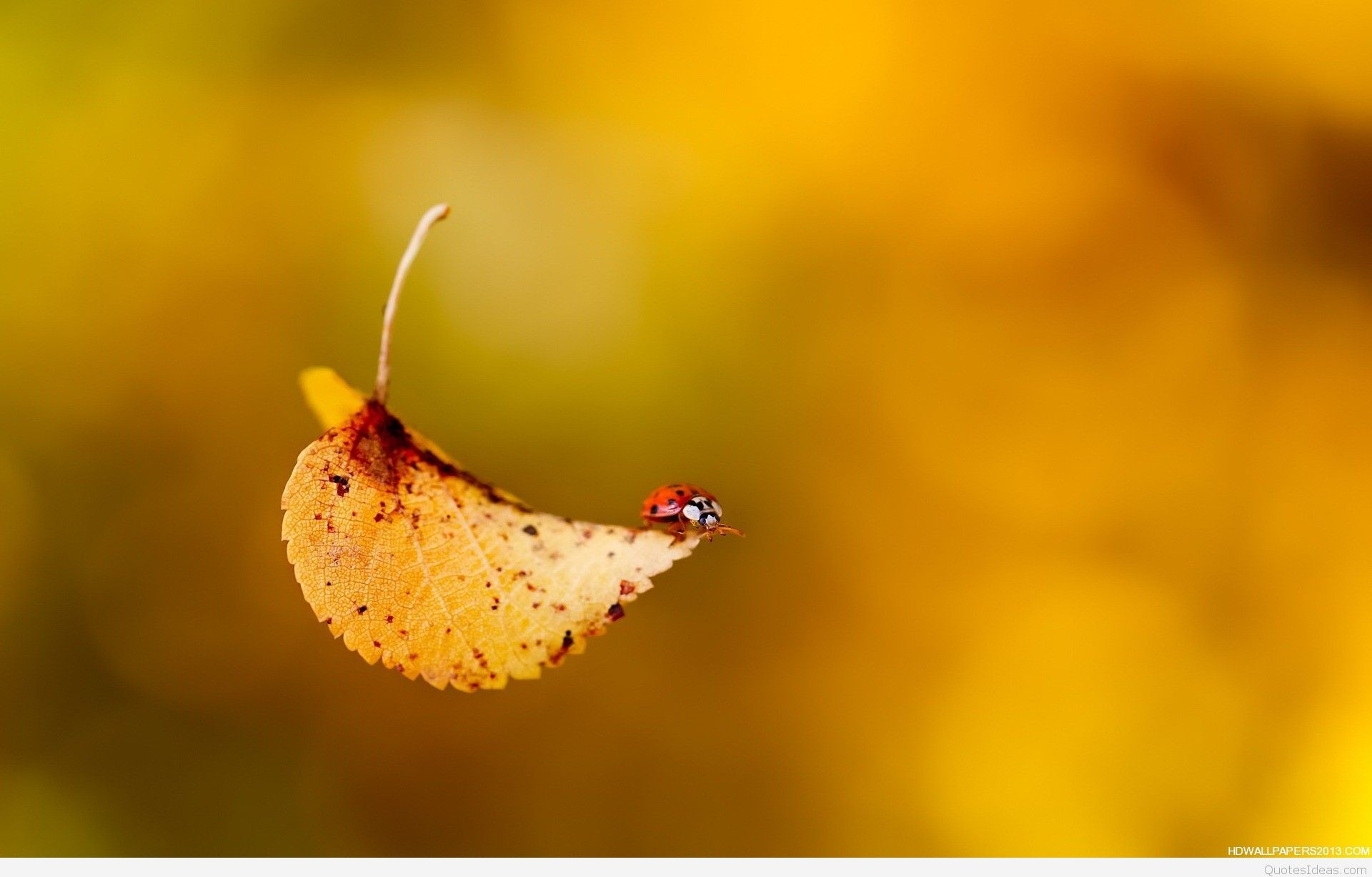 Cool Fall Backgrounds – Wallpaper Cave