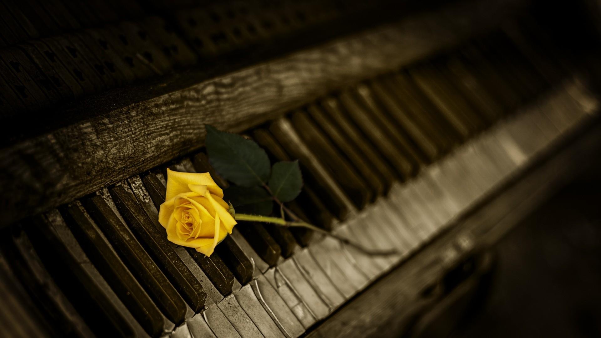 Preview wallpaper piano, rose, keys 1920×1080