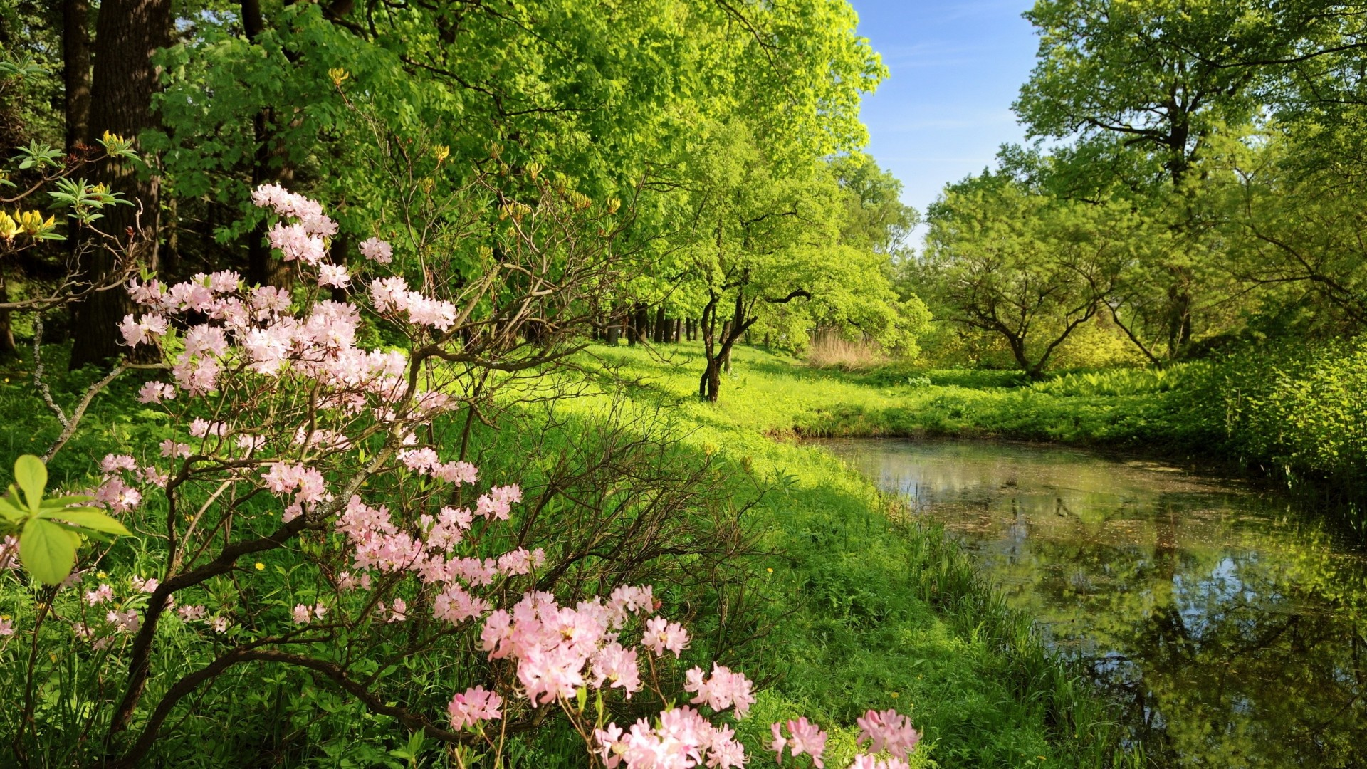 Full HD 1080p Spring Wallpapers HD, Desktop Backgrounds 1920×1080, Images  and Pictures