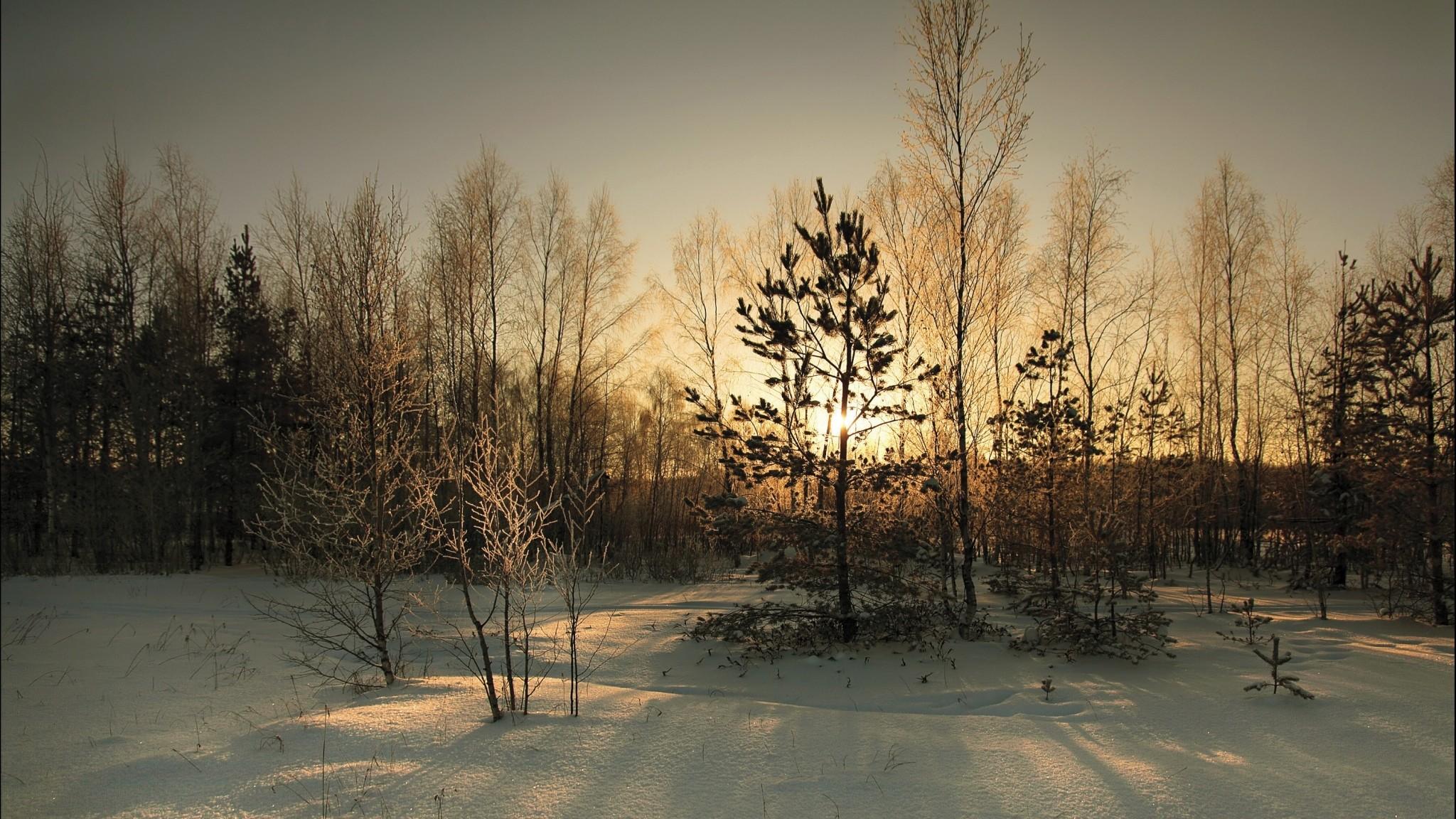 Wallpaper wood, cover, winter, sun