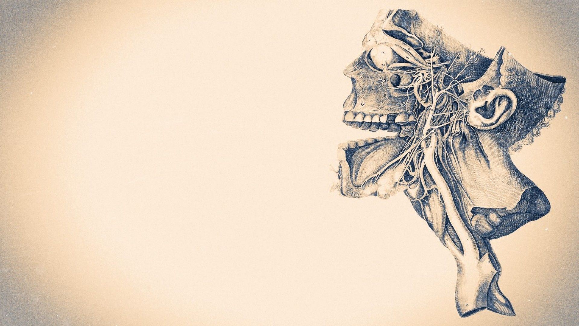 Anatomy HD Wallpapers Backgrounds Wallpaper 1920×1080