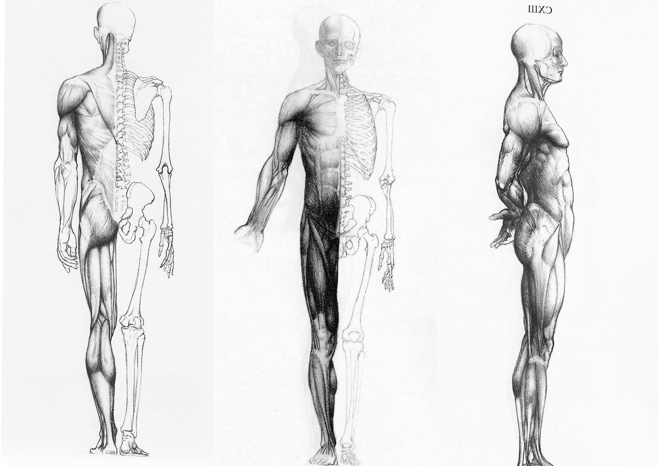 Human Anatomy In Three Ways Wallpapers HD / Desktop and Mobile .