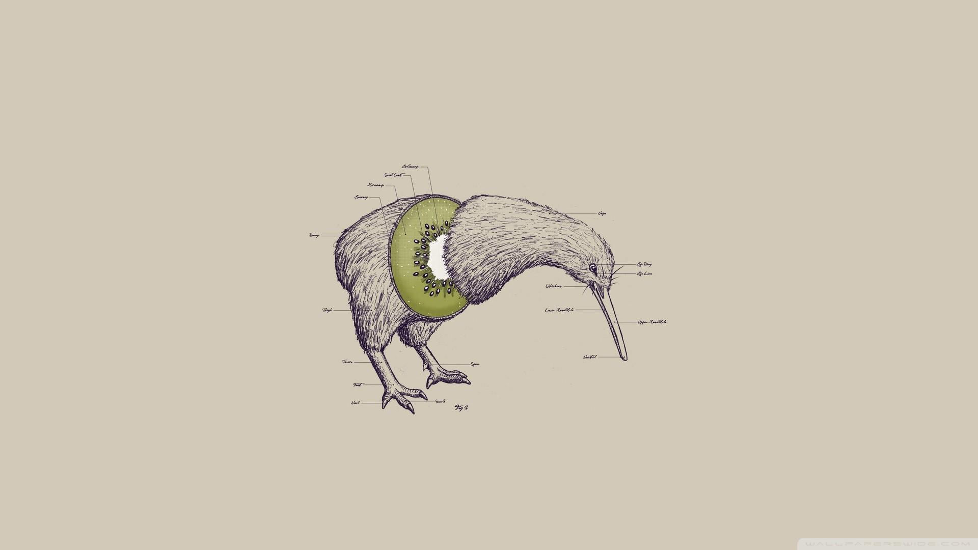 Kiwi Bird HD Wide Wallpaper for Widescreen