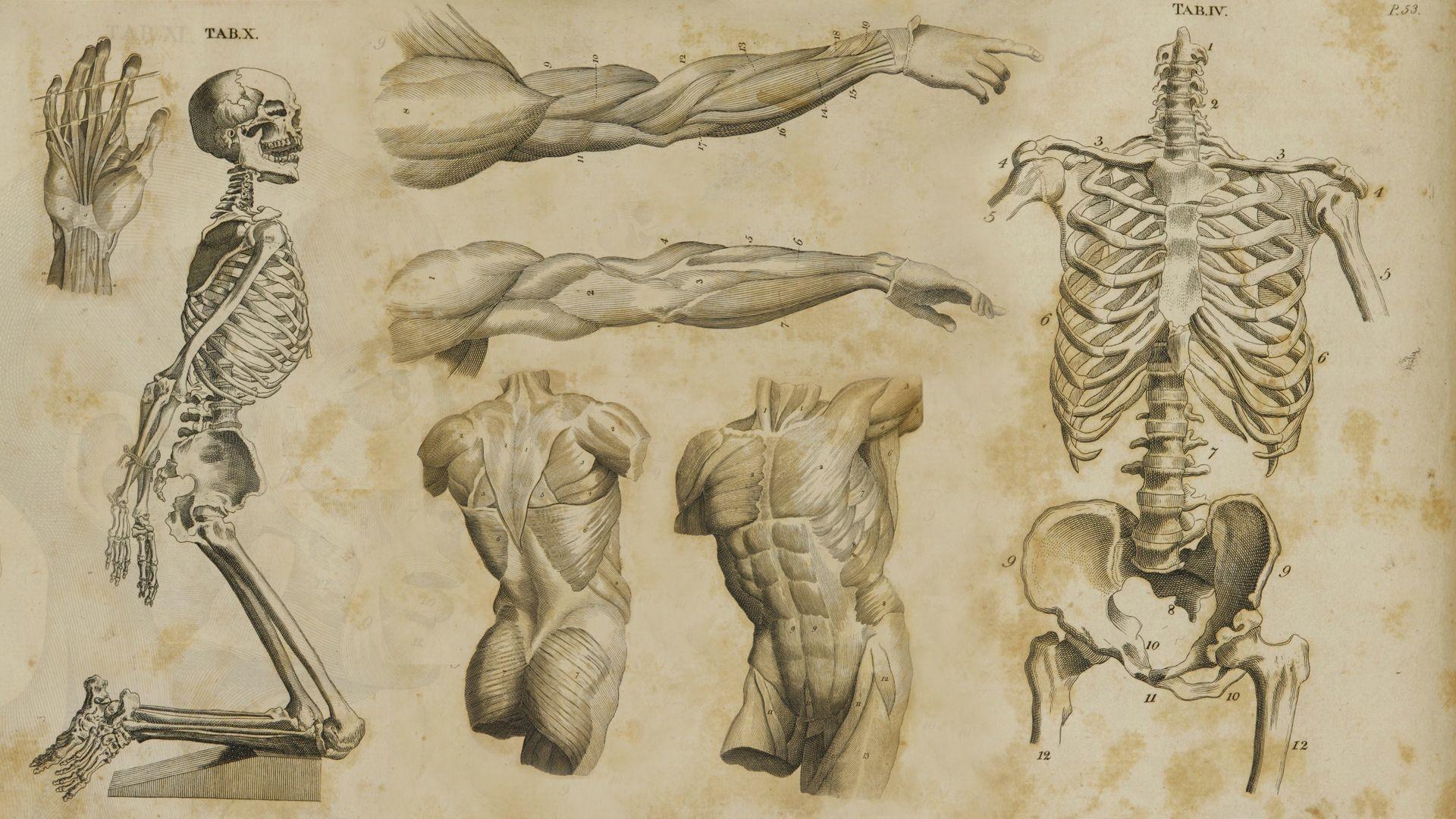 346KiB, 1920×1080, anatomy-wallpaper-HD4.jpg