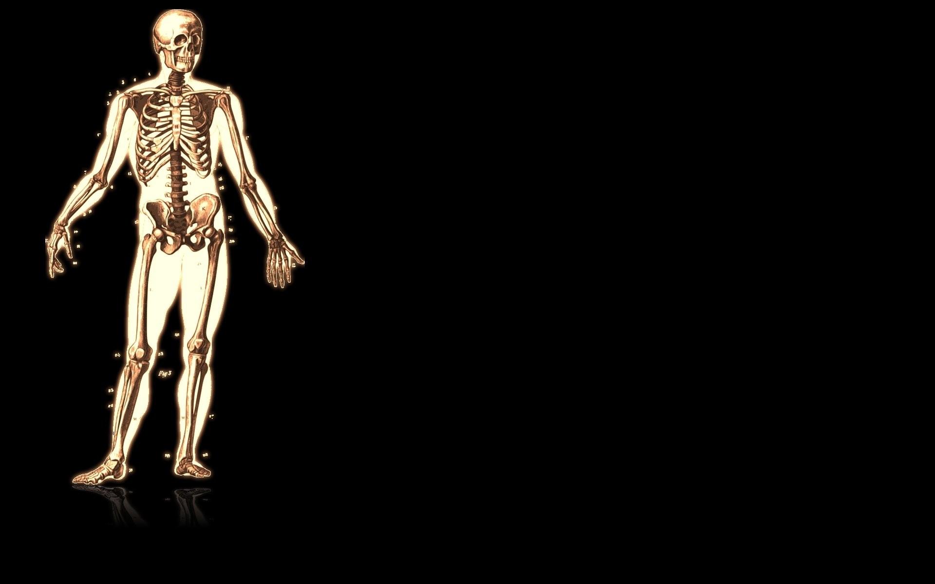 Artistic – Anatomy Wallpaper