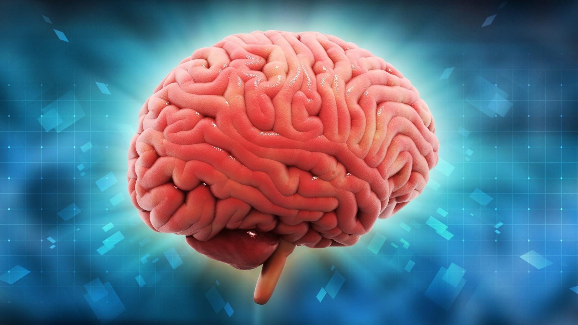 Human Brain Wallpaper