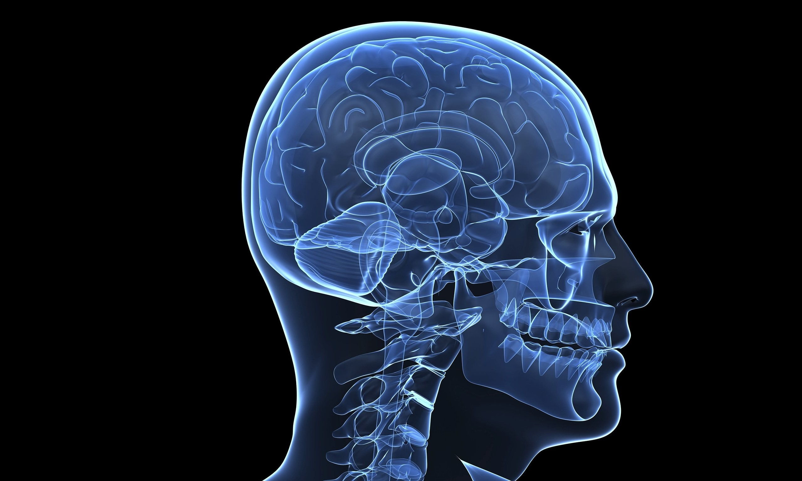 Brain Anatomy Medical Head Skull Digital 3d Xray Psychedelic Wallpaper At  3d Wallpapers