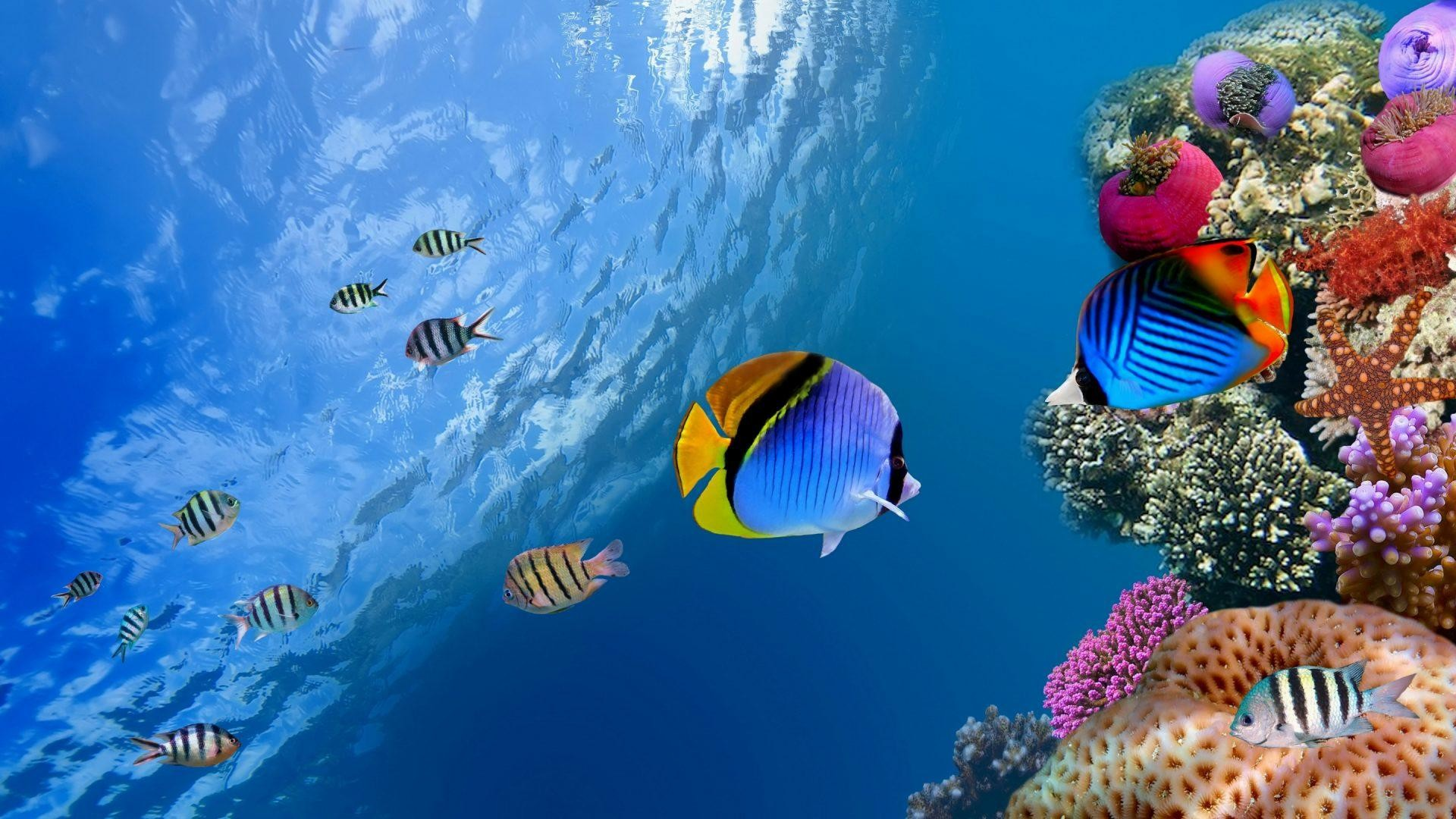 wallpaper.wiki-Awesome-underwater-high-quality-backgrounds-1920×1080-