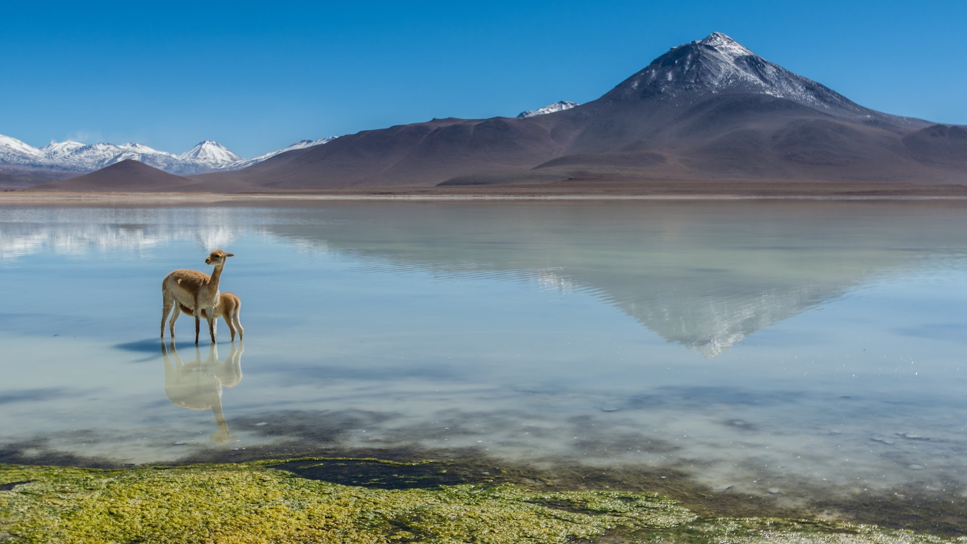 Salt Lake in Chile Wallpapers HD Wallpapers