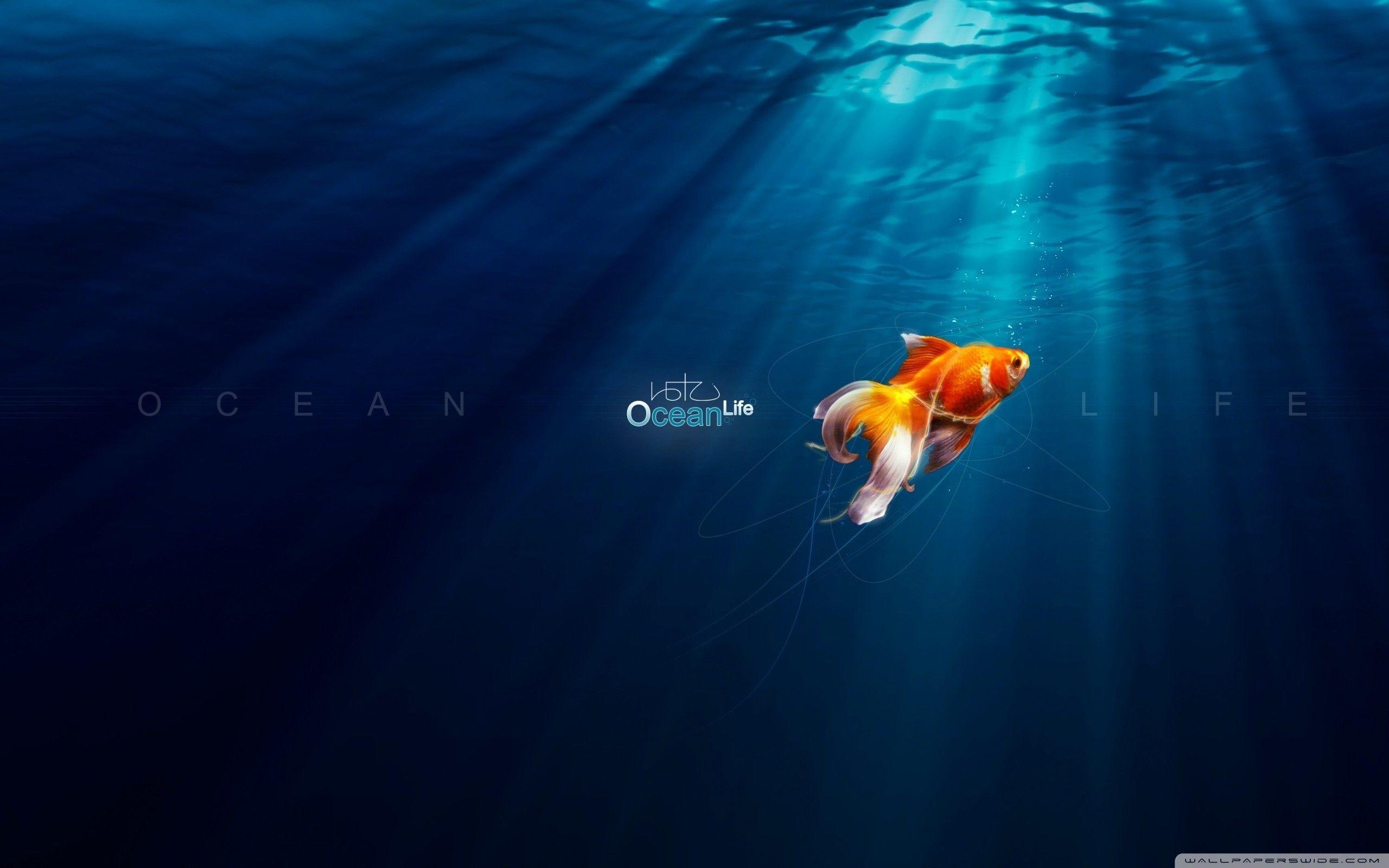 Ocean Life – New HD Wallpapers